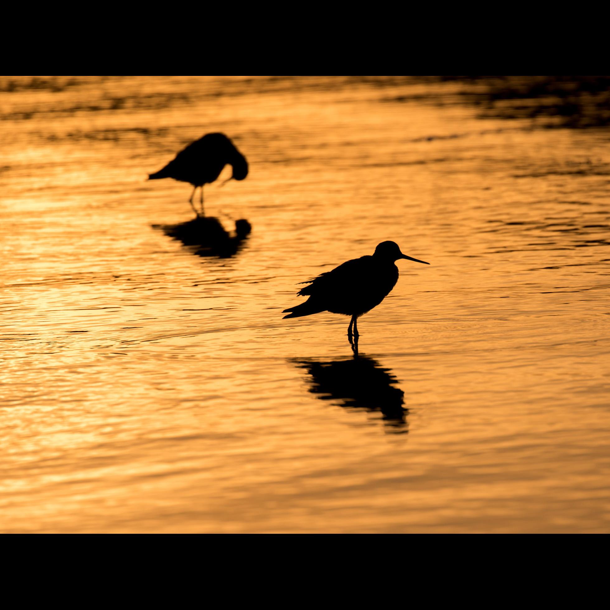 10.15 BIRDS AT SUNSET
