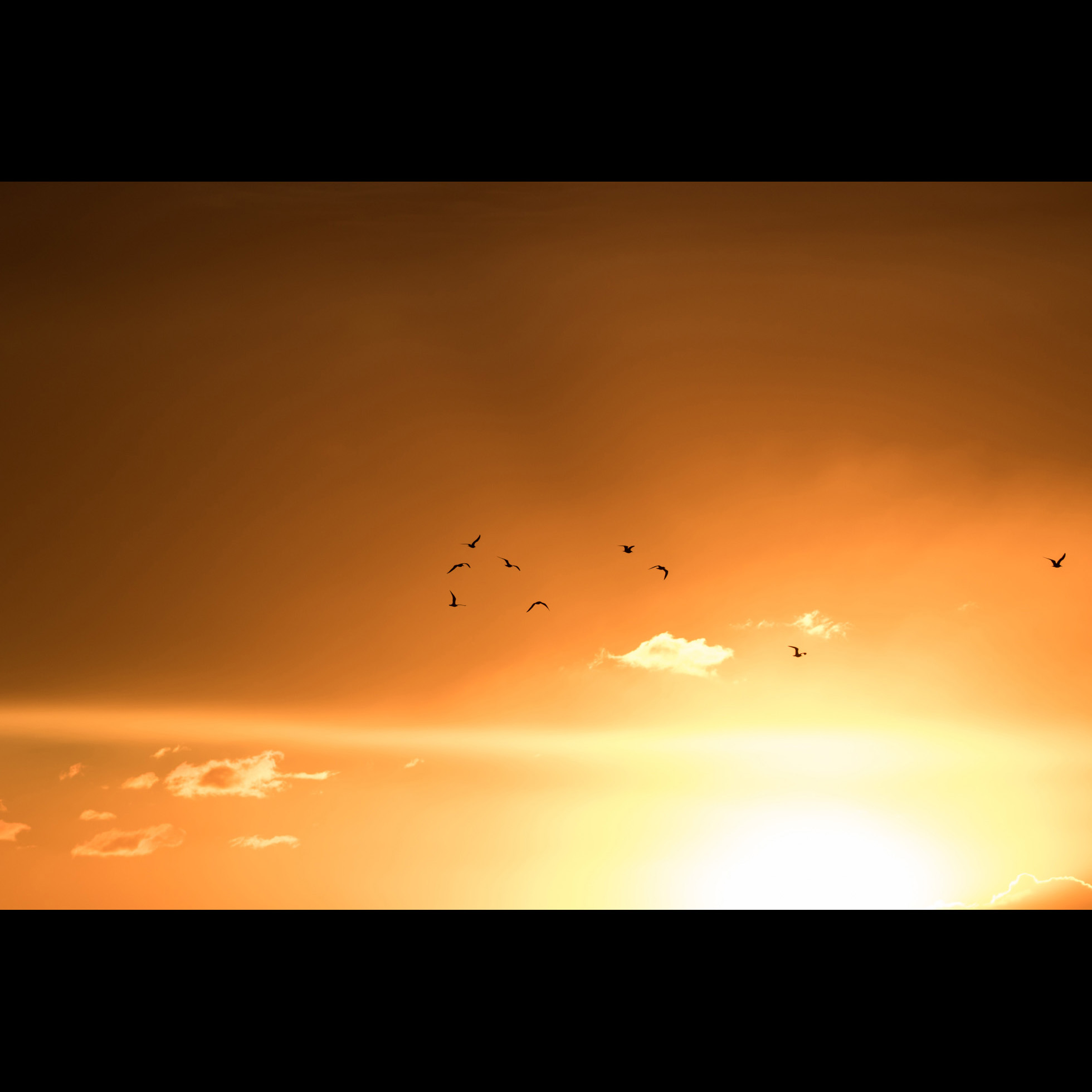 10.23 GOD LIGHT BIRDS