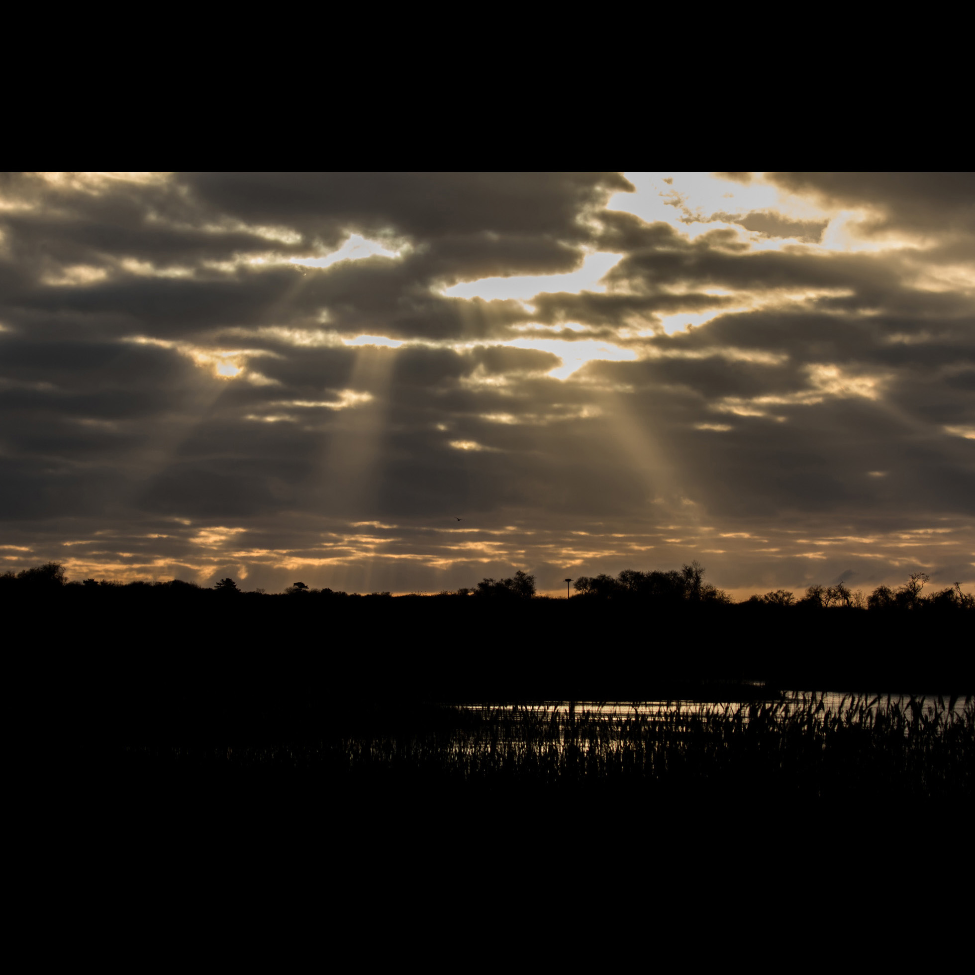 12.20 SQUIBNOCKET GOD LIGHT