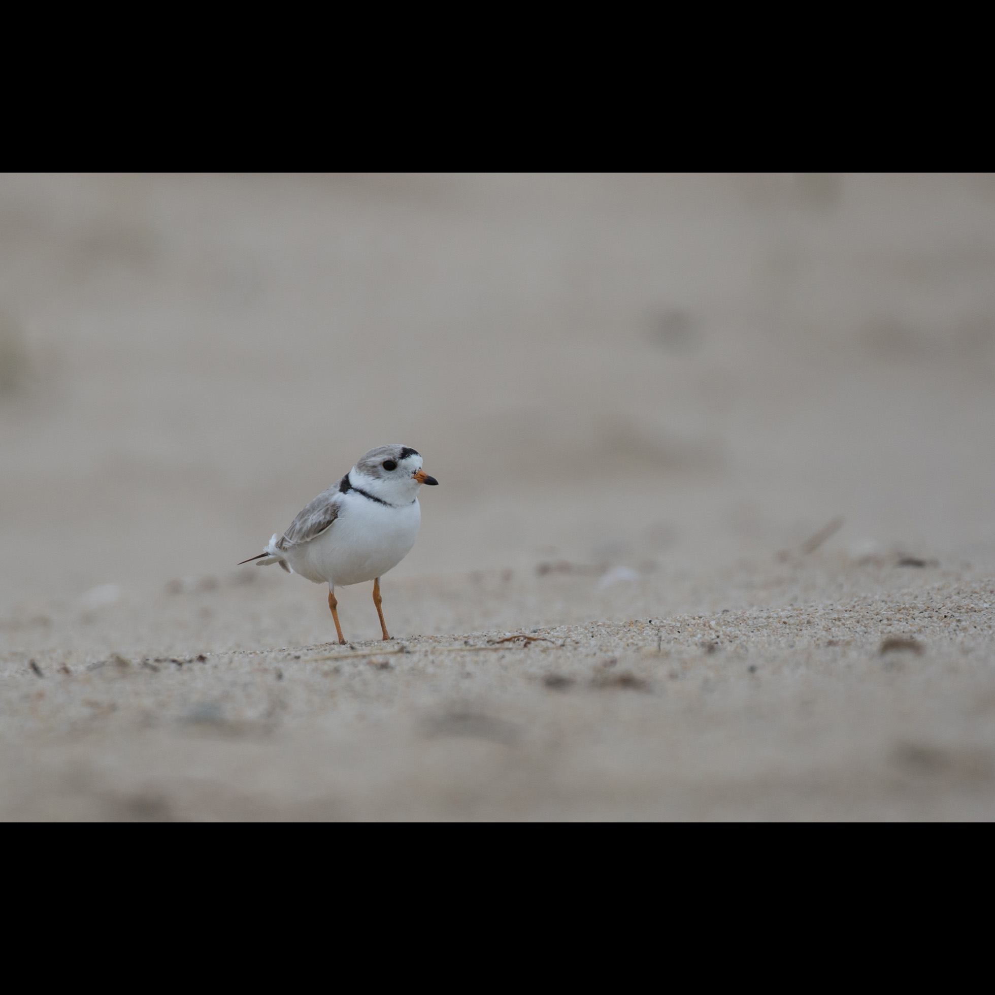4.7 FIRST PLOVER