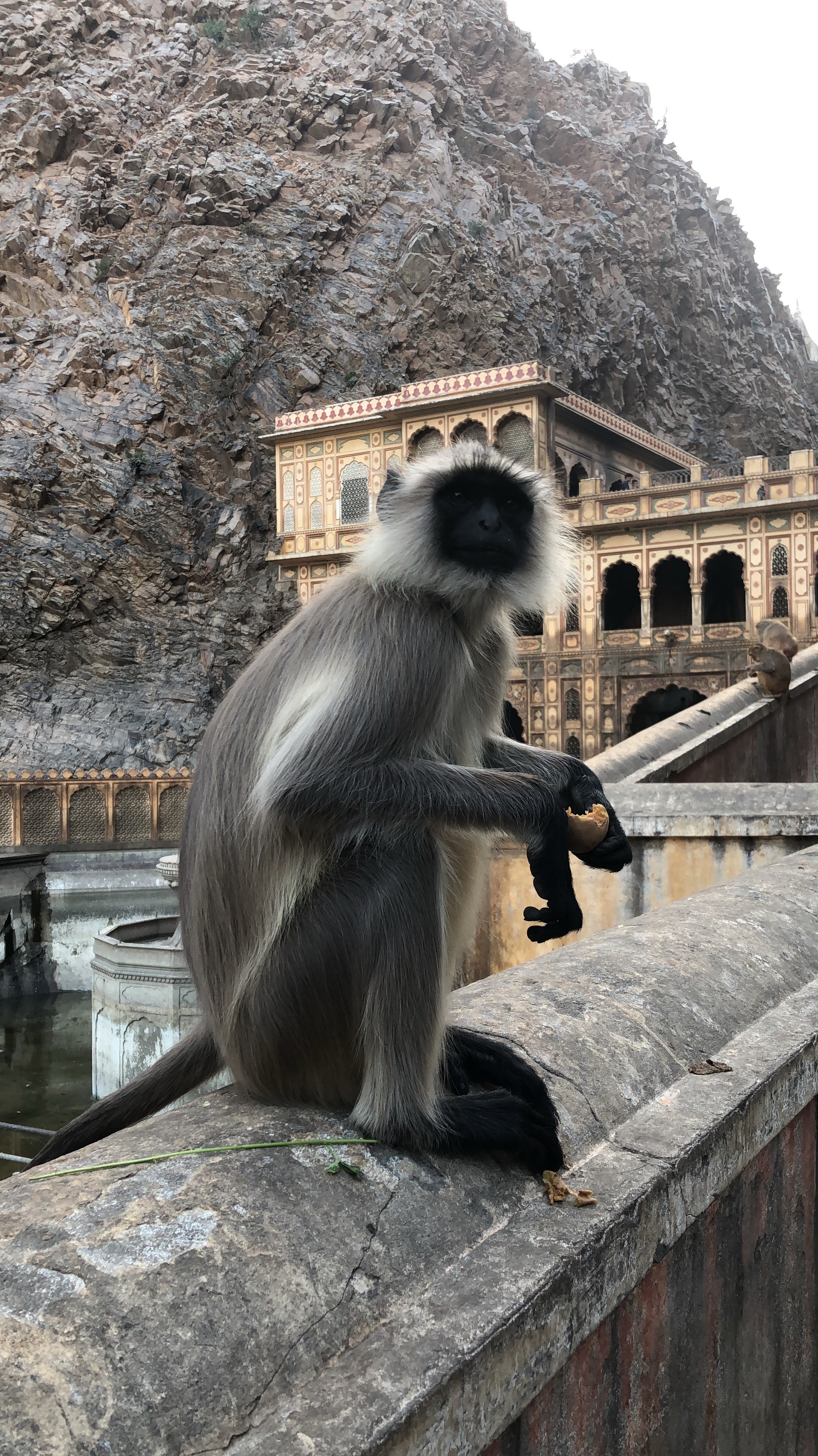 Spotted at Monkey Temple