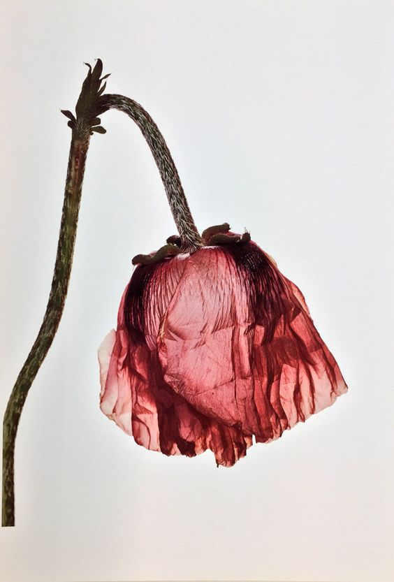 Photo : Irving Penn