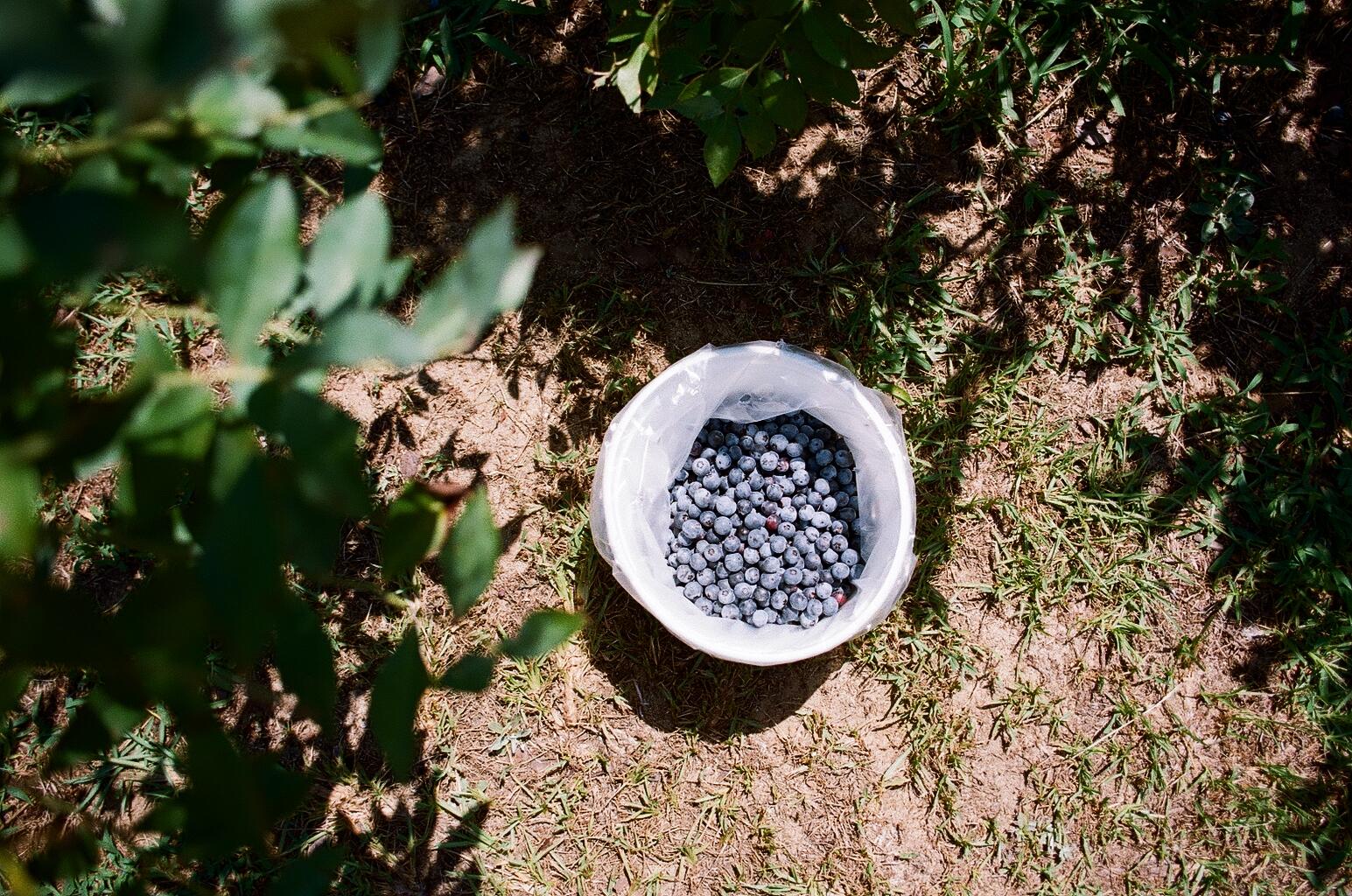 Harlem, GA, Blue House Farm - 3.jpg