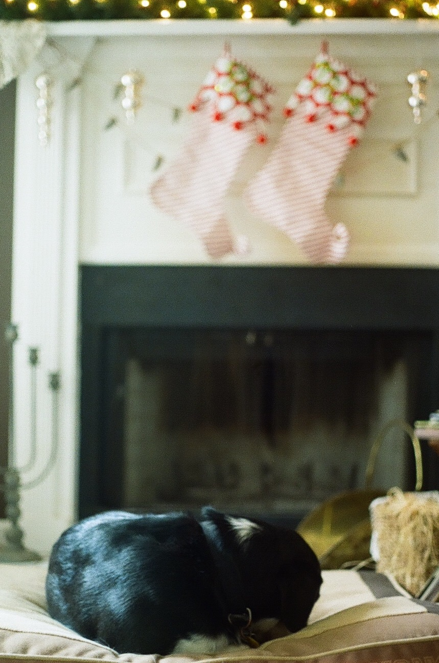 A fuzzy puppy curled up in front of the fire completes the perfect Christmas picture. My dog Ike was happy to model.
