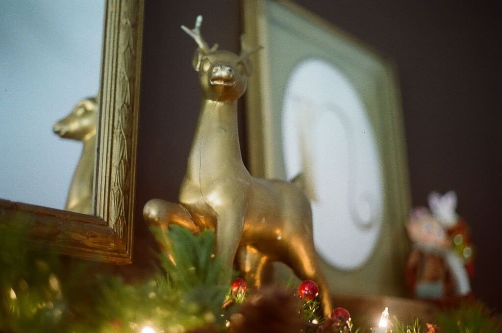 I picked up this lightweight, gold painted reindeer this summer at an estate sale and he's easily my favorite Christmas addition of 2016!