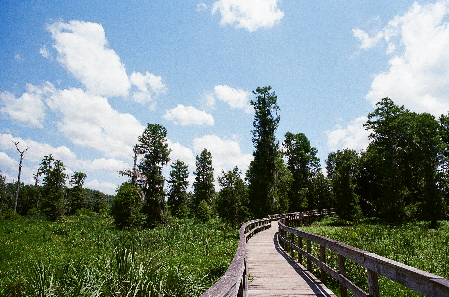 Phinizy Swamp is used as both an educational and research center by the city and also as a nature preserve with beautiful trails!