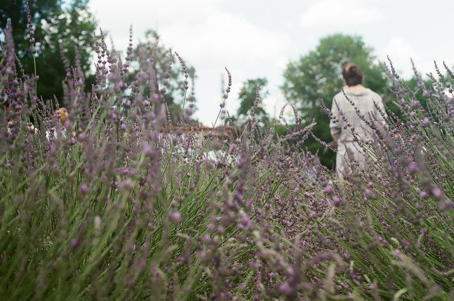 Red Oak Lavender Farm 4