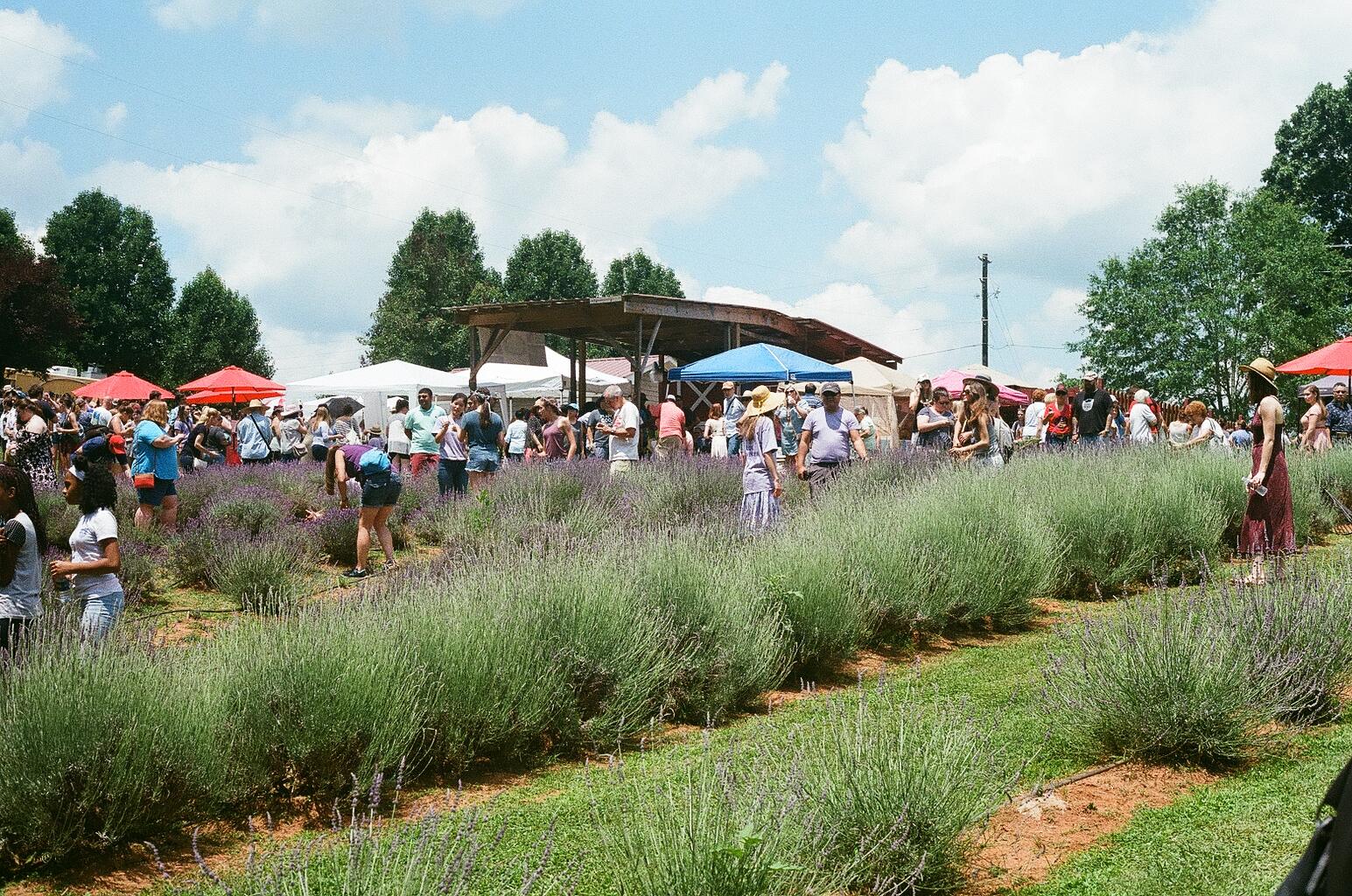 Red Oak Lavender Festival 5
