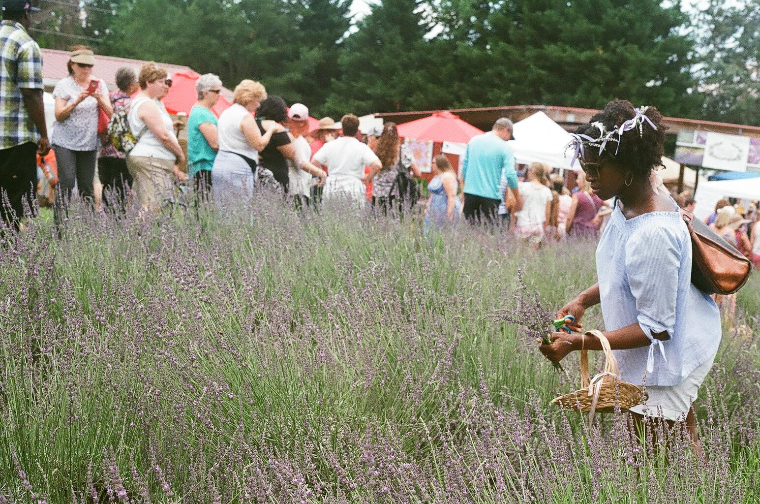 Red Oak Lavender Festival 9