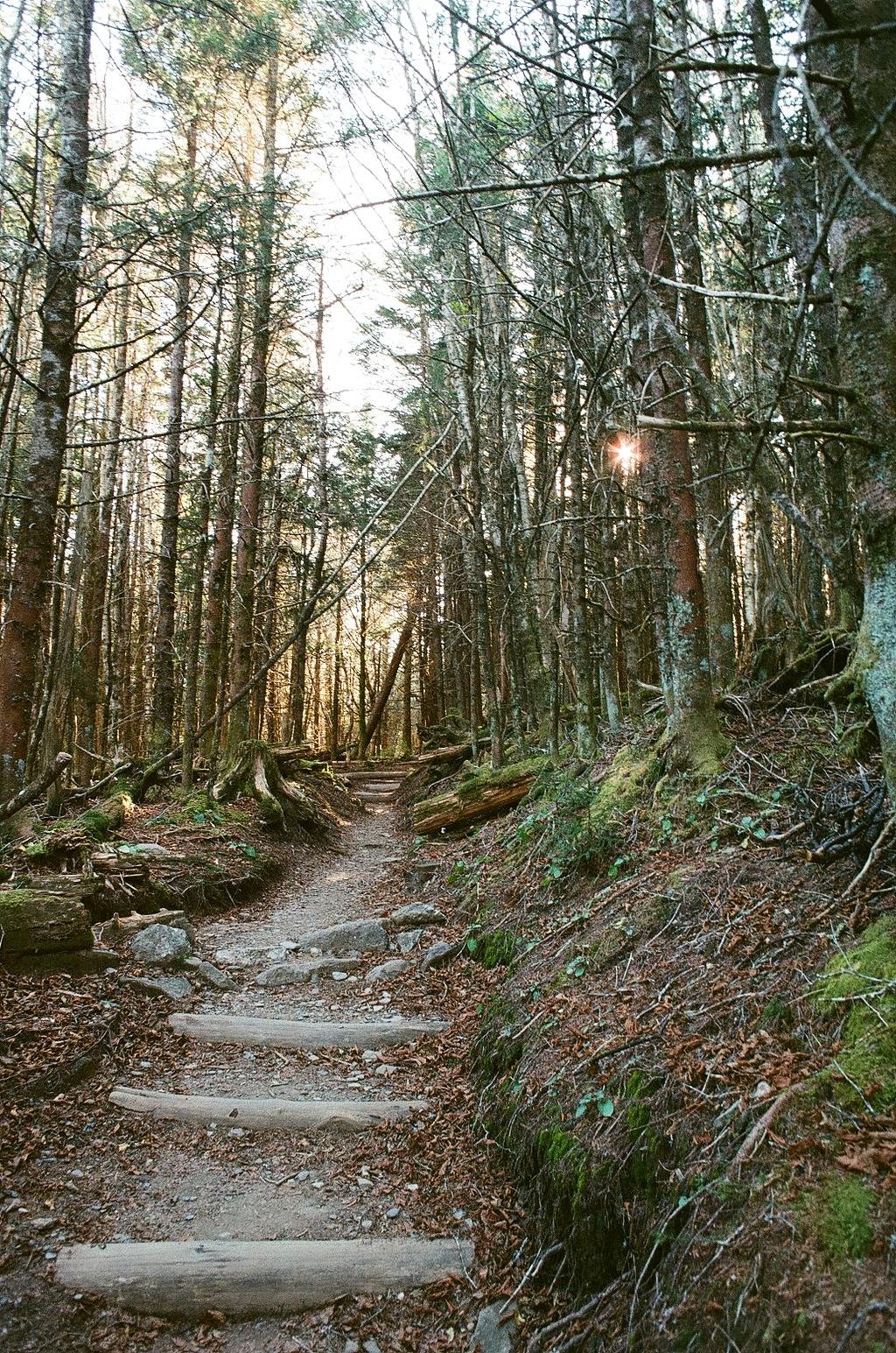 Great Smoky Mountains Appalachian Trail