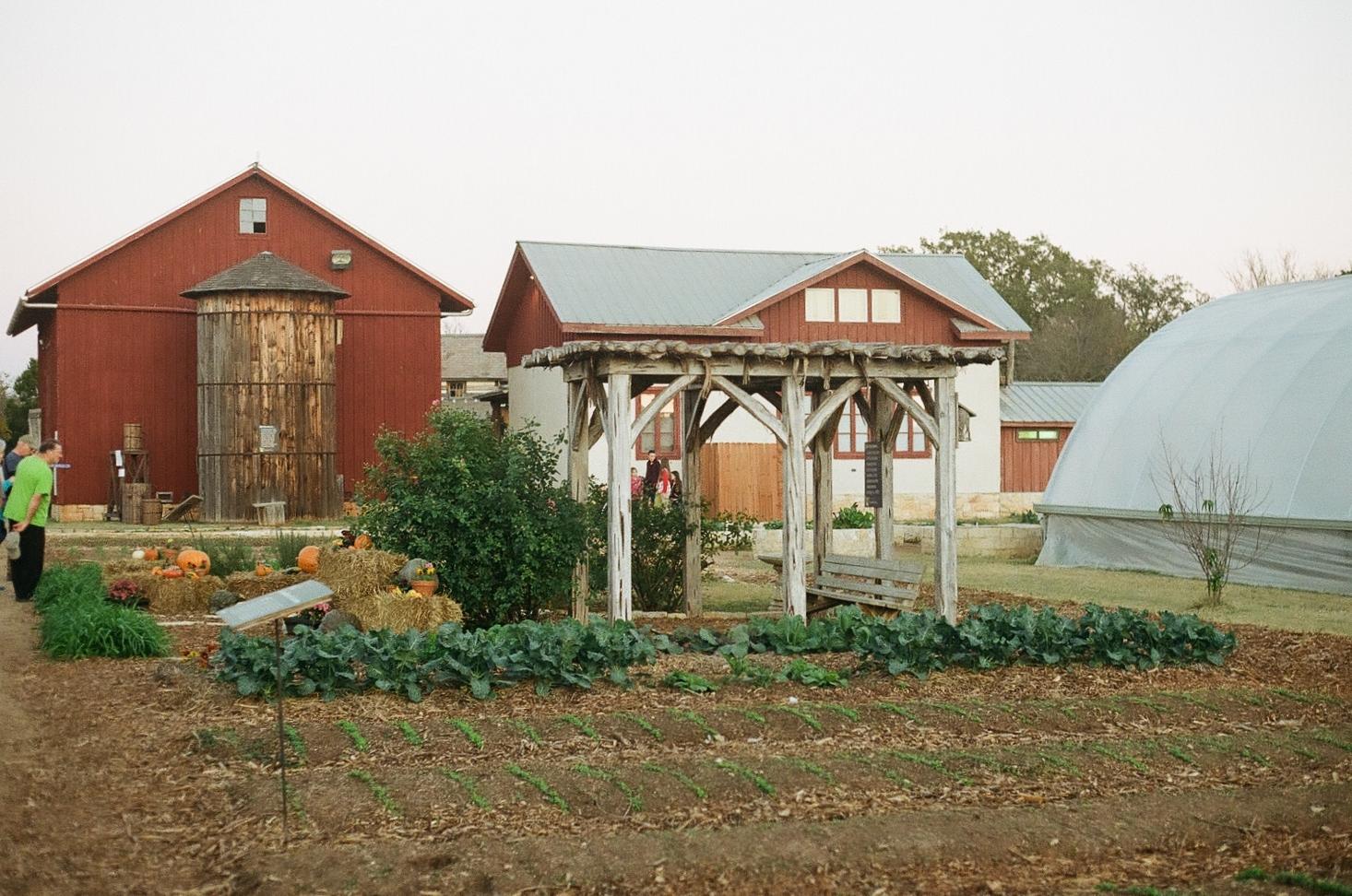 Homestead Fair - garden