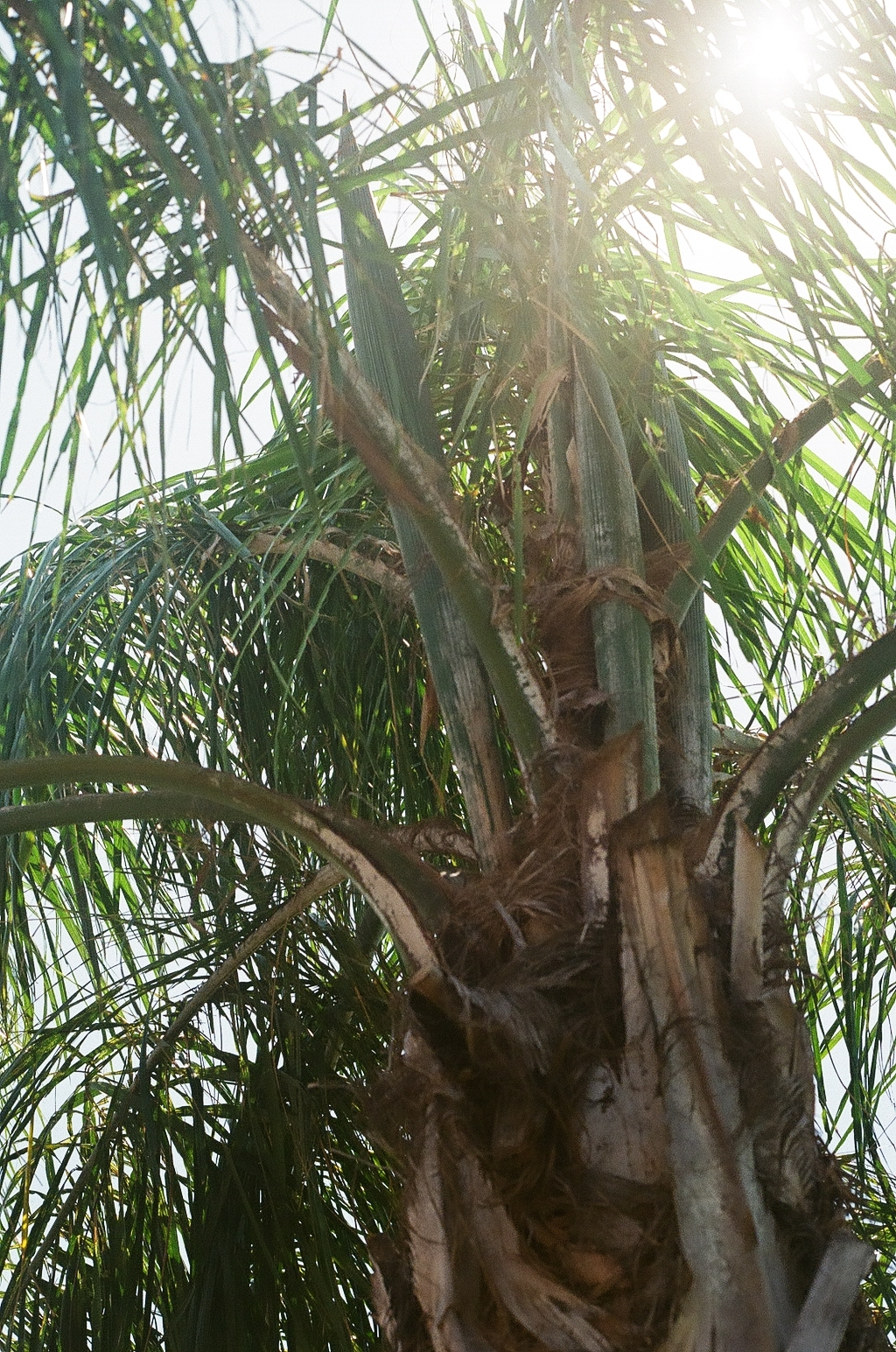 Florianopolis Palm Tree Beach