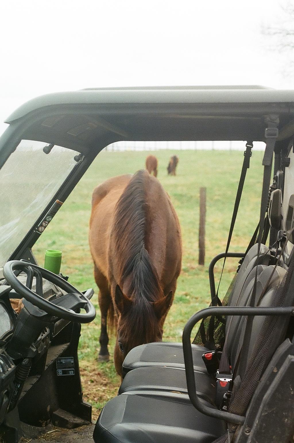 Glasgow, Kentucky Horses