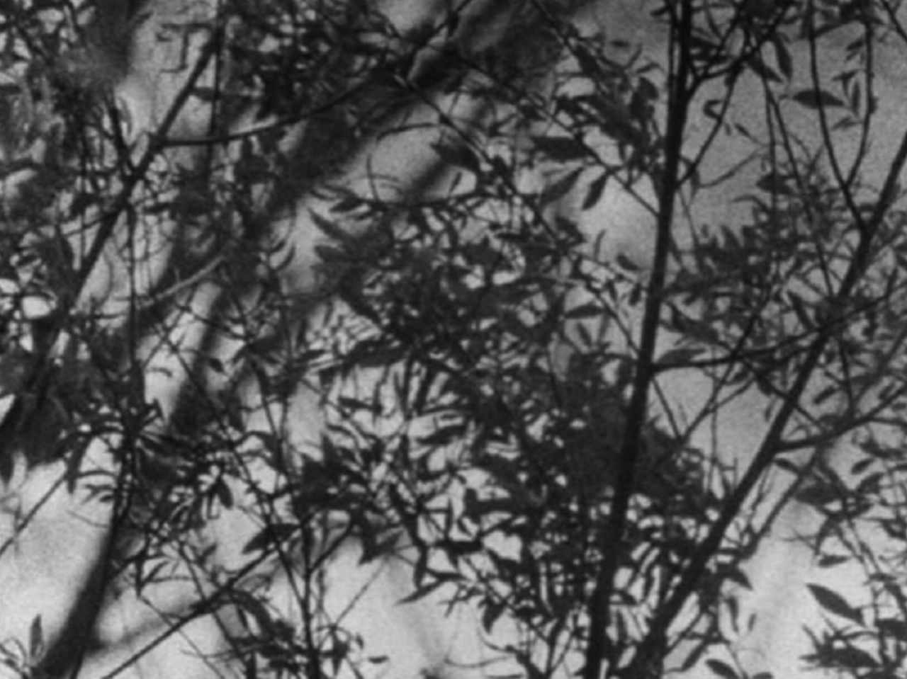 Filter Beds  Guy Sherwin  1998 / 9 minutes / UK / 16mm / silent  A delicate study of a tangle of scrub and trees. A very shallow depth of field causes branches and stalks of wild grasses to emerge and disappear as Sherwin racks focus, settling on the jet planes sweeping across an impossibly distant sky. The soft rich grain of the muted image lends it a dreamlike timelessness. -Brian Frye