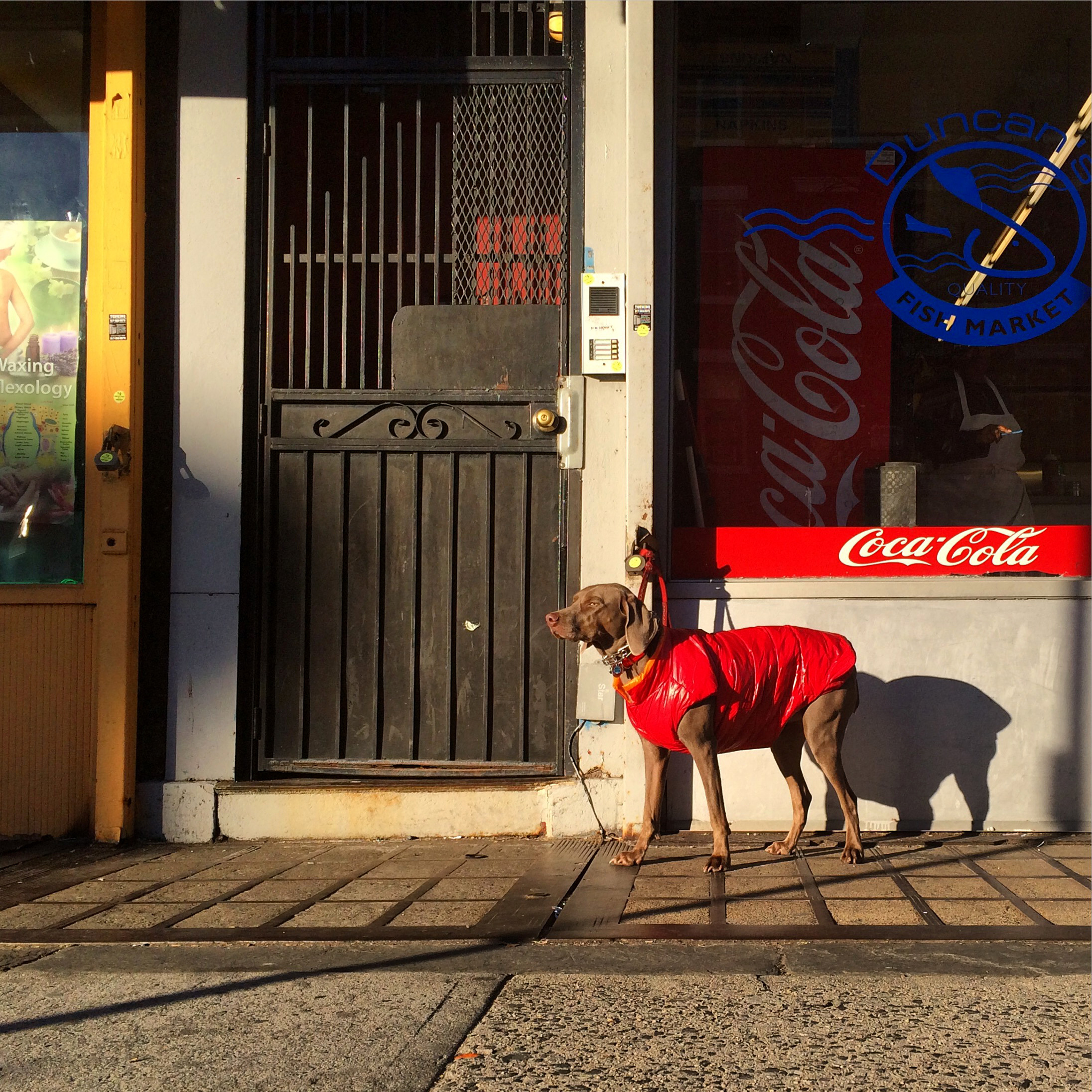 Dog awaiting its owner, Brooklyn, 2015. (Kevin Martin)