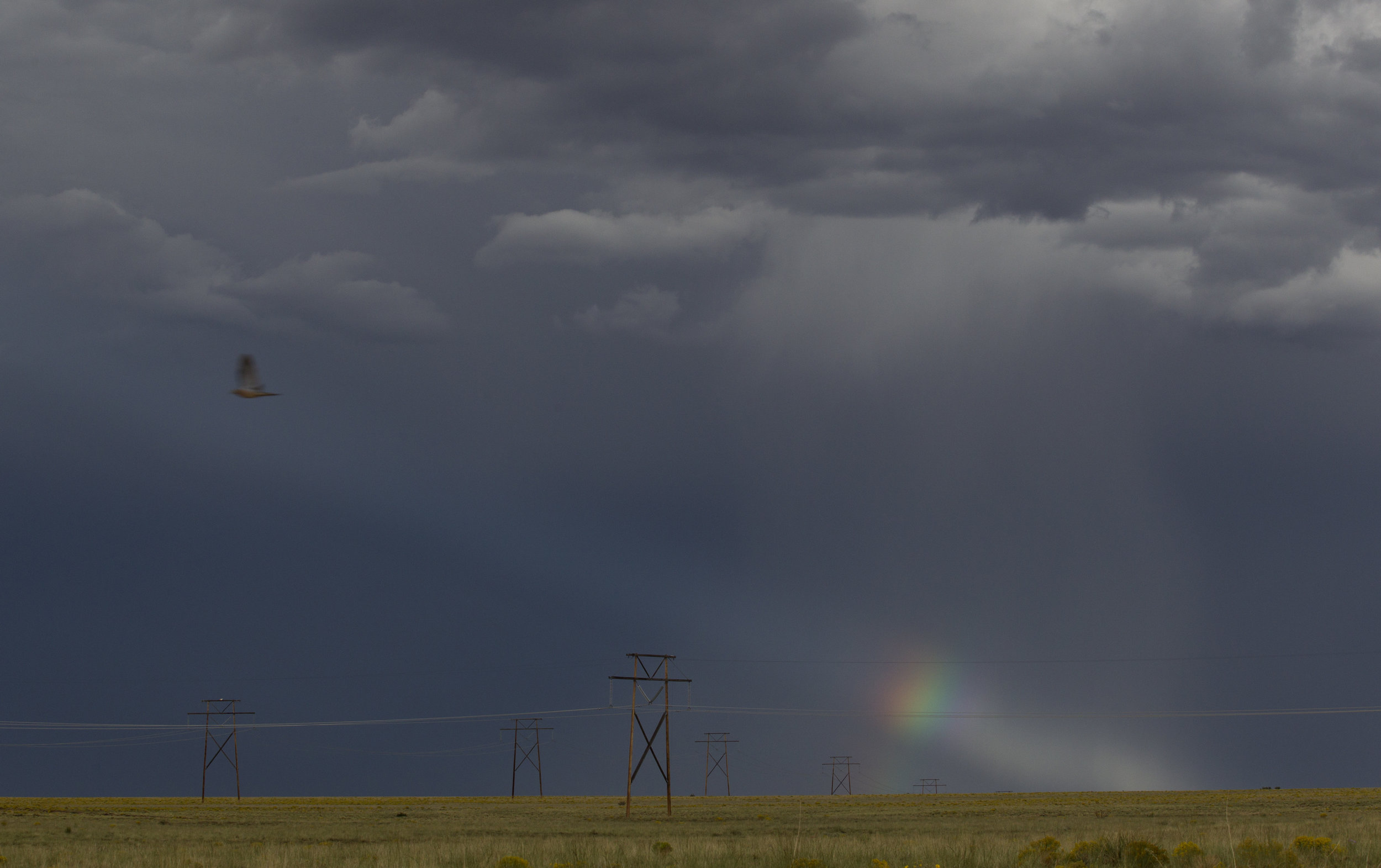 A bird flies past a rainbow during a thunderstorm on Saturday, Sept. 10, 2016,near Albuquerque, N.M.(Kevin Martin)