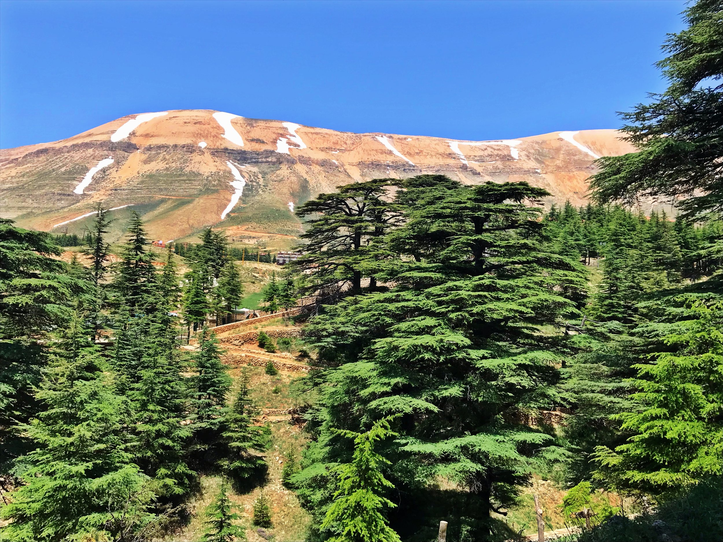 St Anthony, Cedars of God & Gibran Museum Day Tour