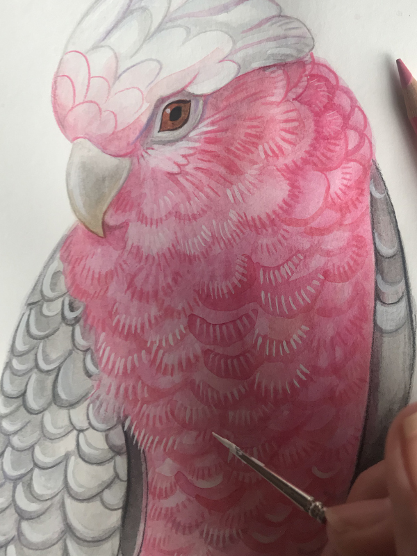Painting feather details