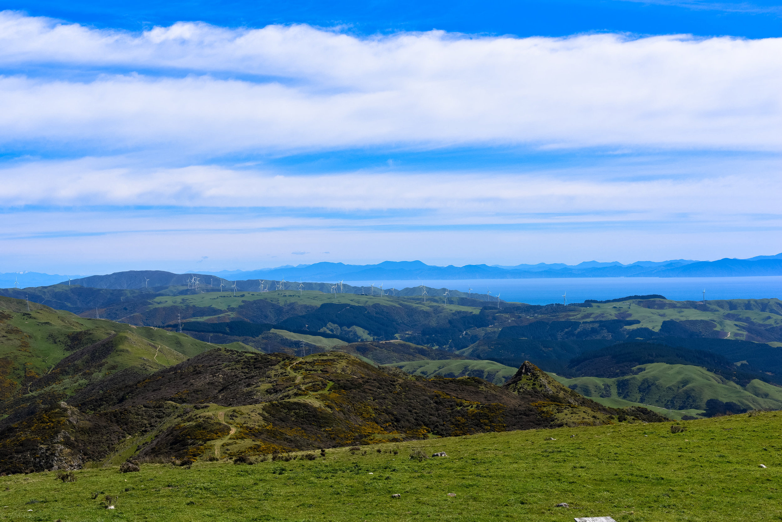 Looking towards Makara and the wind farm. Lots of people were running up this way. I have been told that there is a good running trail from there. Fitness level needed: high!