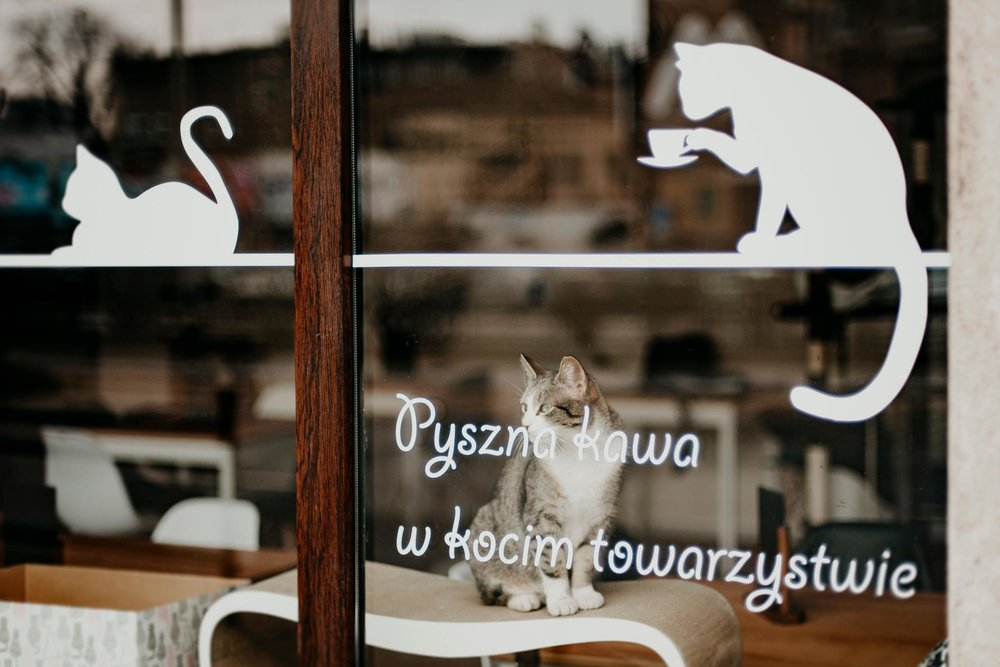 The Most Intriguing Cafes in Wroclaw
