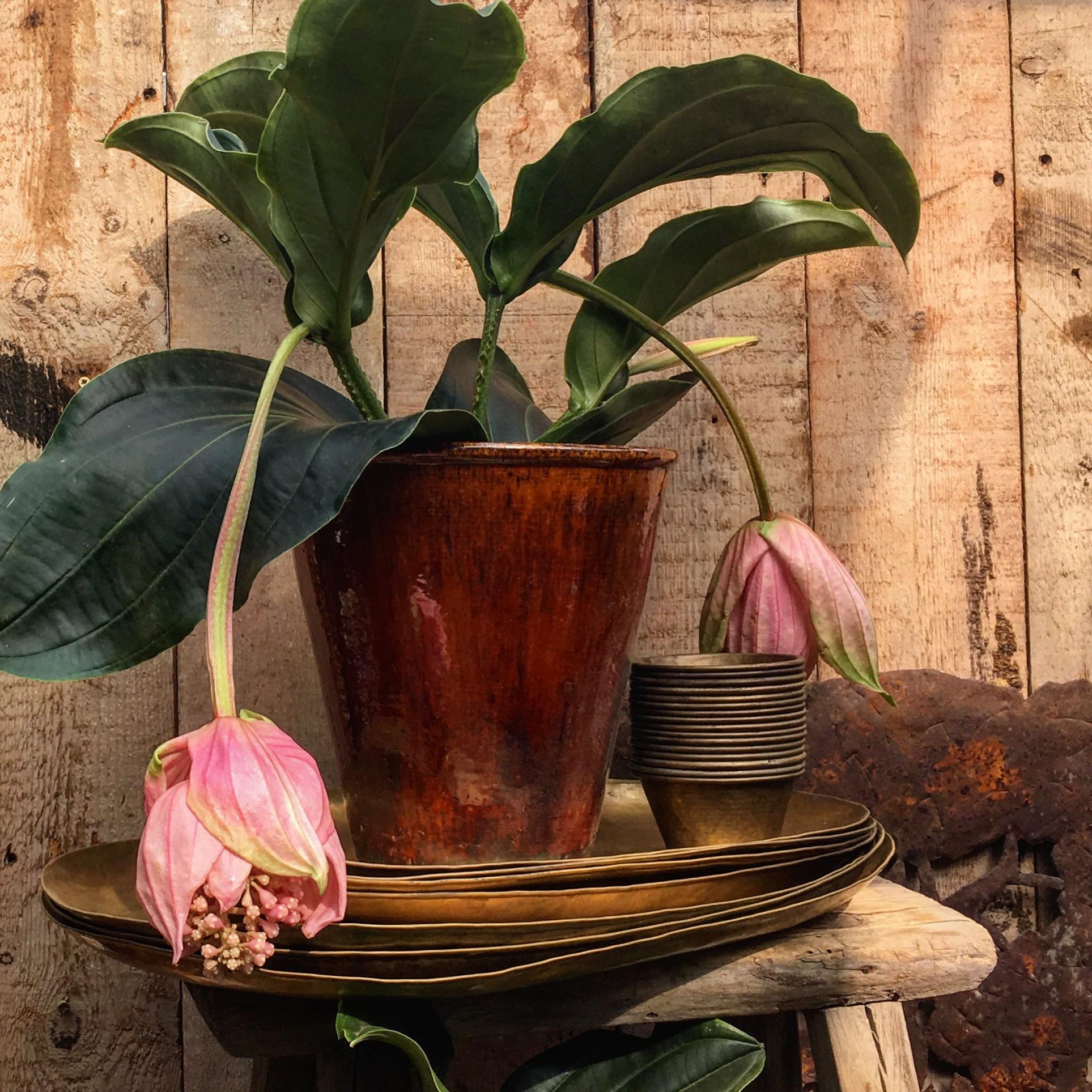 Petersham-Nurseries-Plants-Flowers-Queensmith-Loves-Hatton-Garden-Jewellers