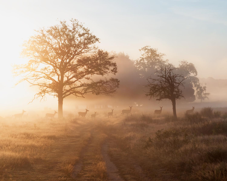 Ida_Hollis_Photography_Nature012.jpg