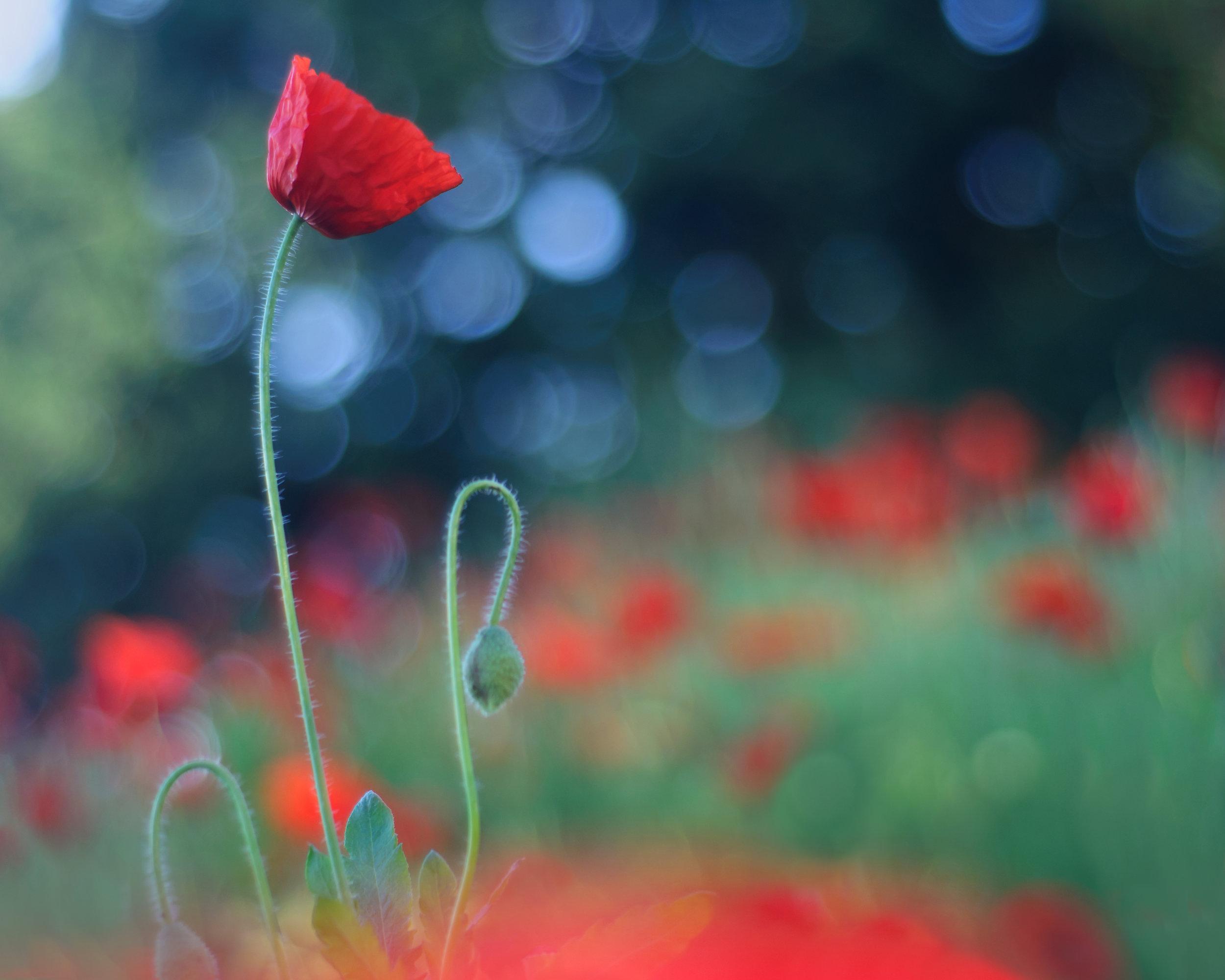 Ida_Hollis_Photography_Nature041.jpg