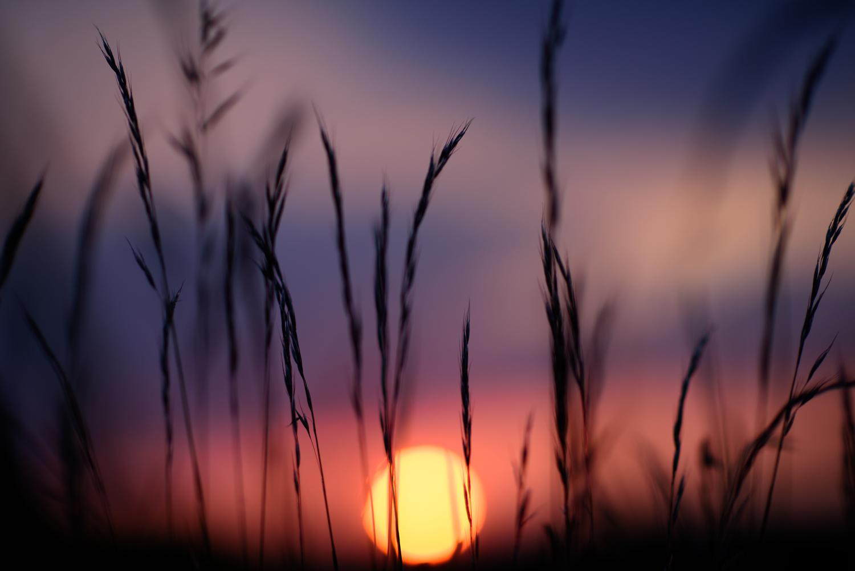 Ida_Hollis_Photography_Nature056.jpg