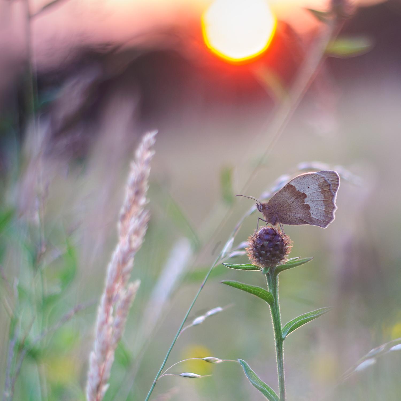 ButterflySunNewWEB.jpg