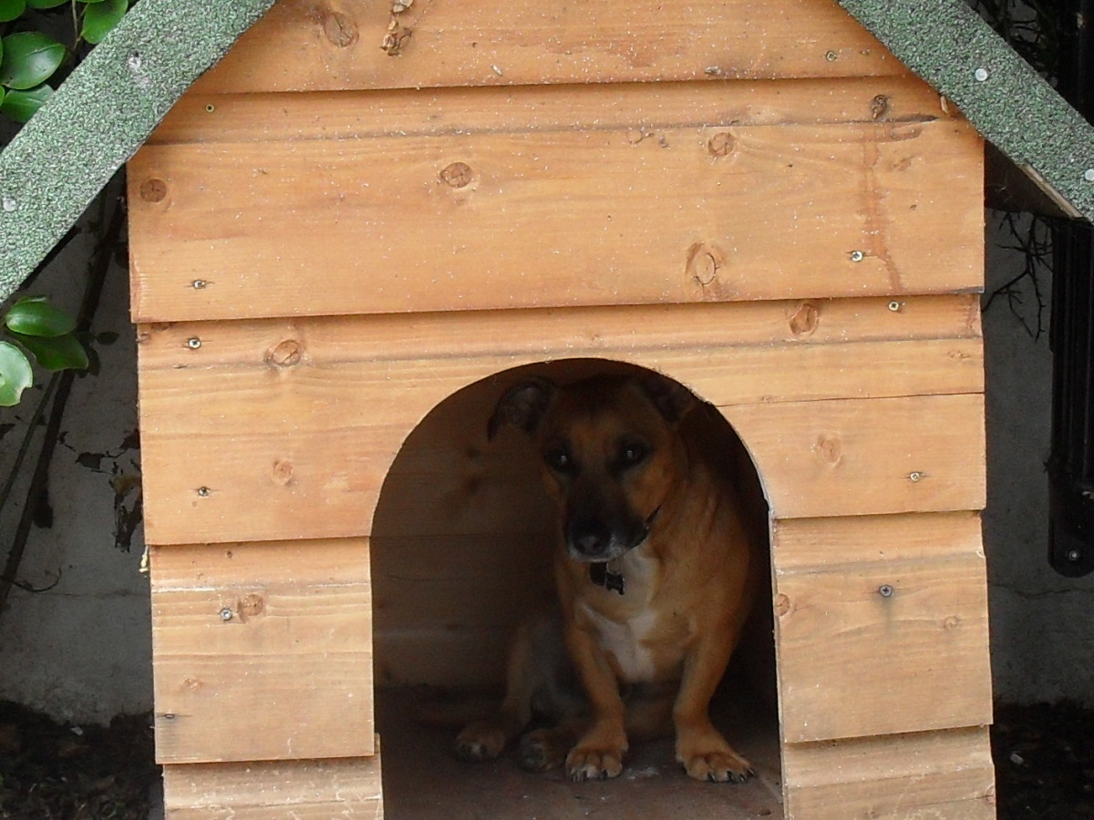 Leon in the Dog House