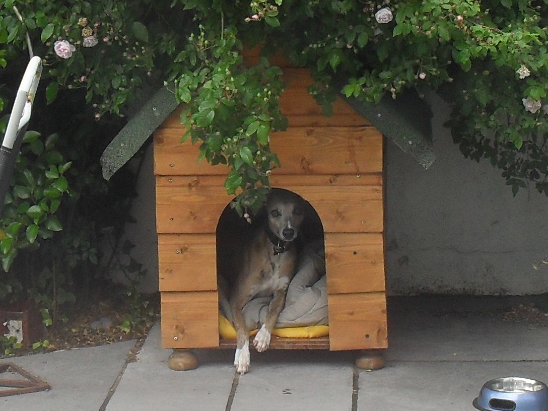 Lenny in the dog house May 2011