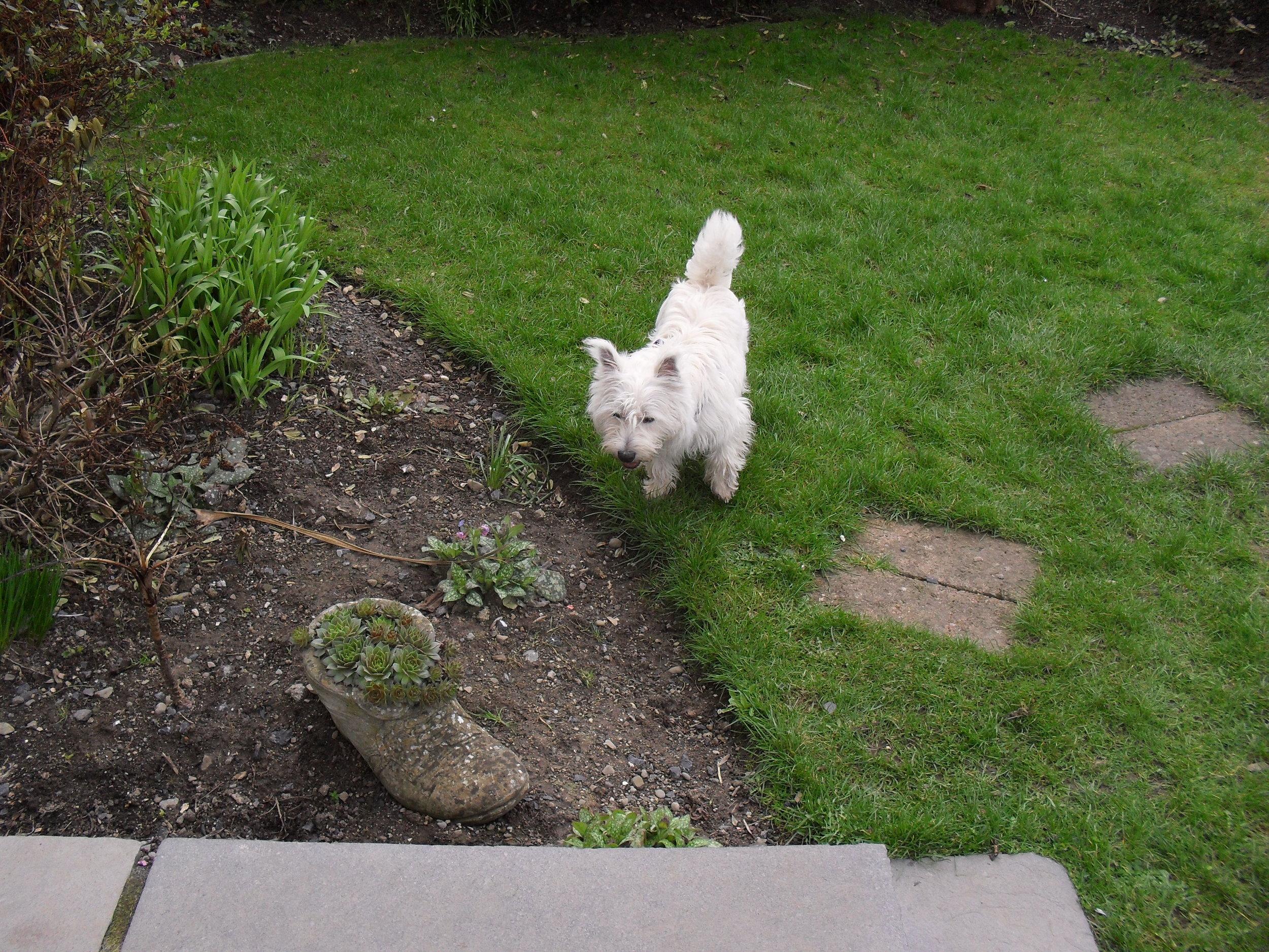 Alfie Feb 2011.jpg