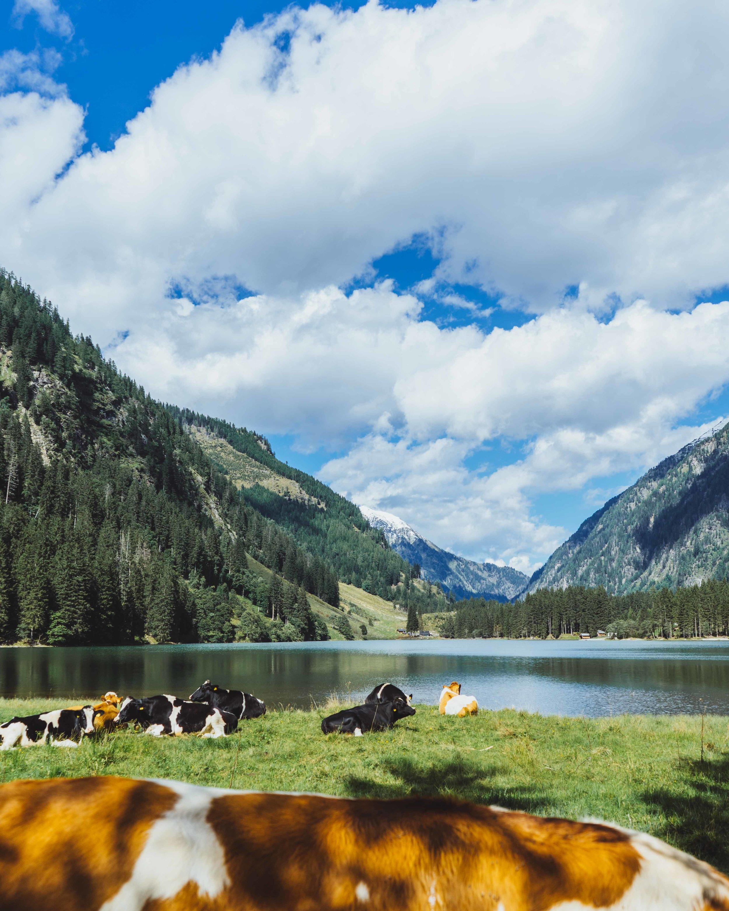 Austria -09868.jpg