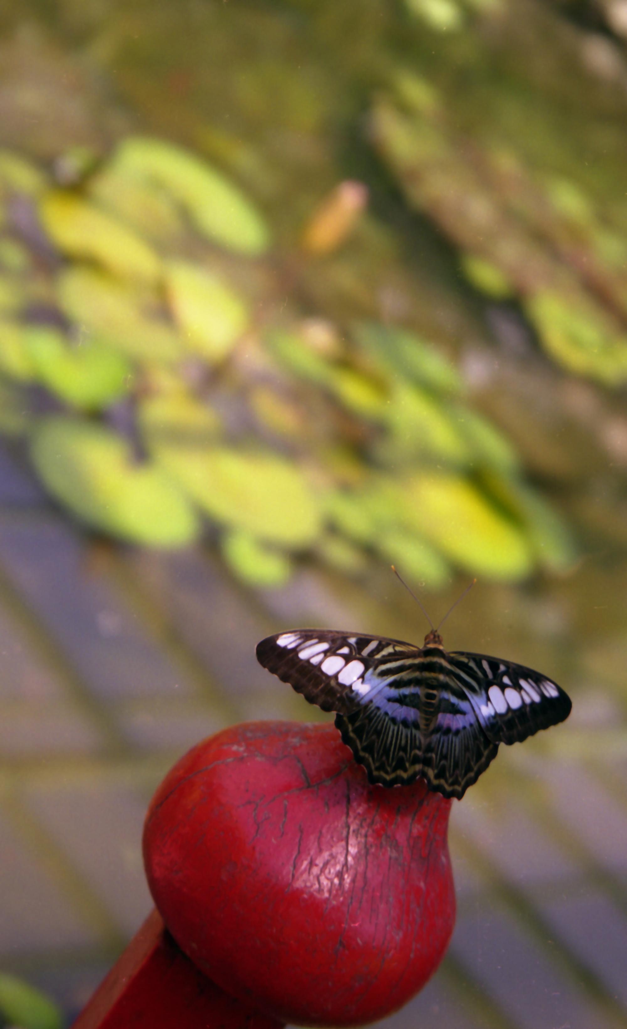 5-Butterfly farm in Malaysia.jpg
