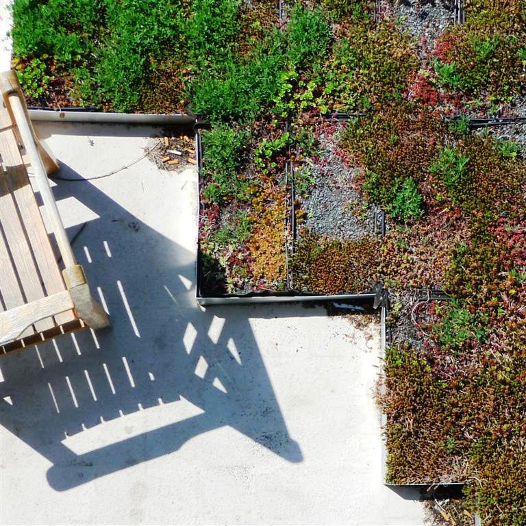 vg_chair shadows_reevesGREENroof1004_02autocorrected (Large).jpg