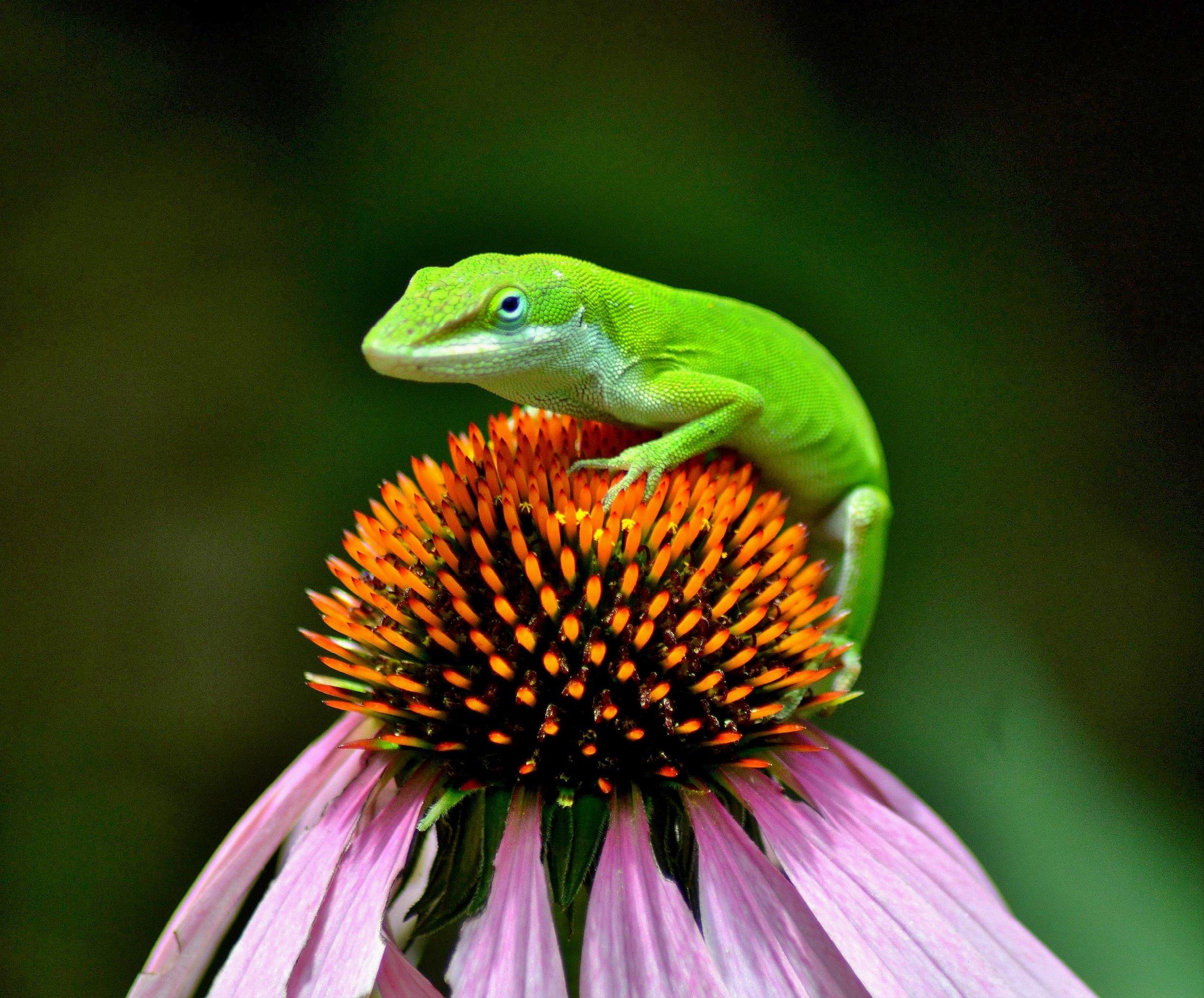 Photo by Terri Bowman  [Image Description] A lizard sitting on top of a plant.