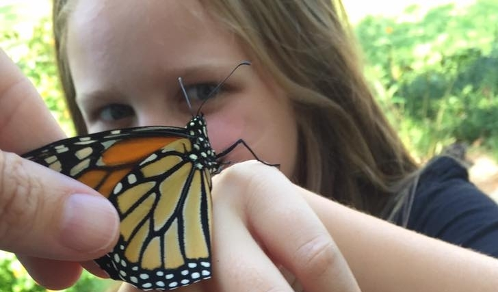 [Image Description] A young girl holding a black and yellow butterfly.