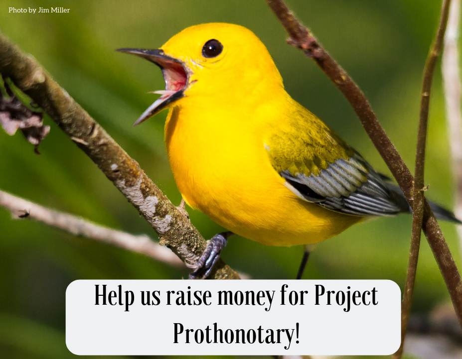 Help us raise money for Project Prothonotary!.png