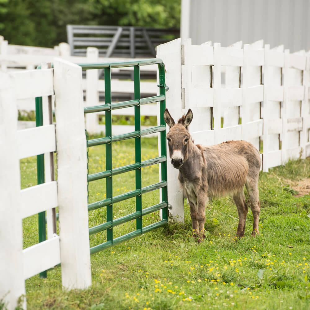 Small Animal — Tarter Farm and Ranch Equipment | American
