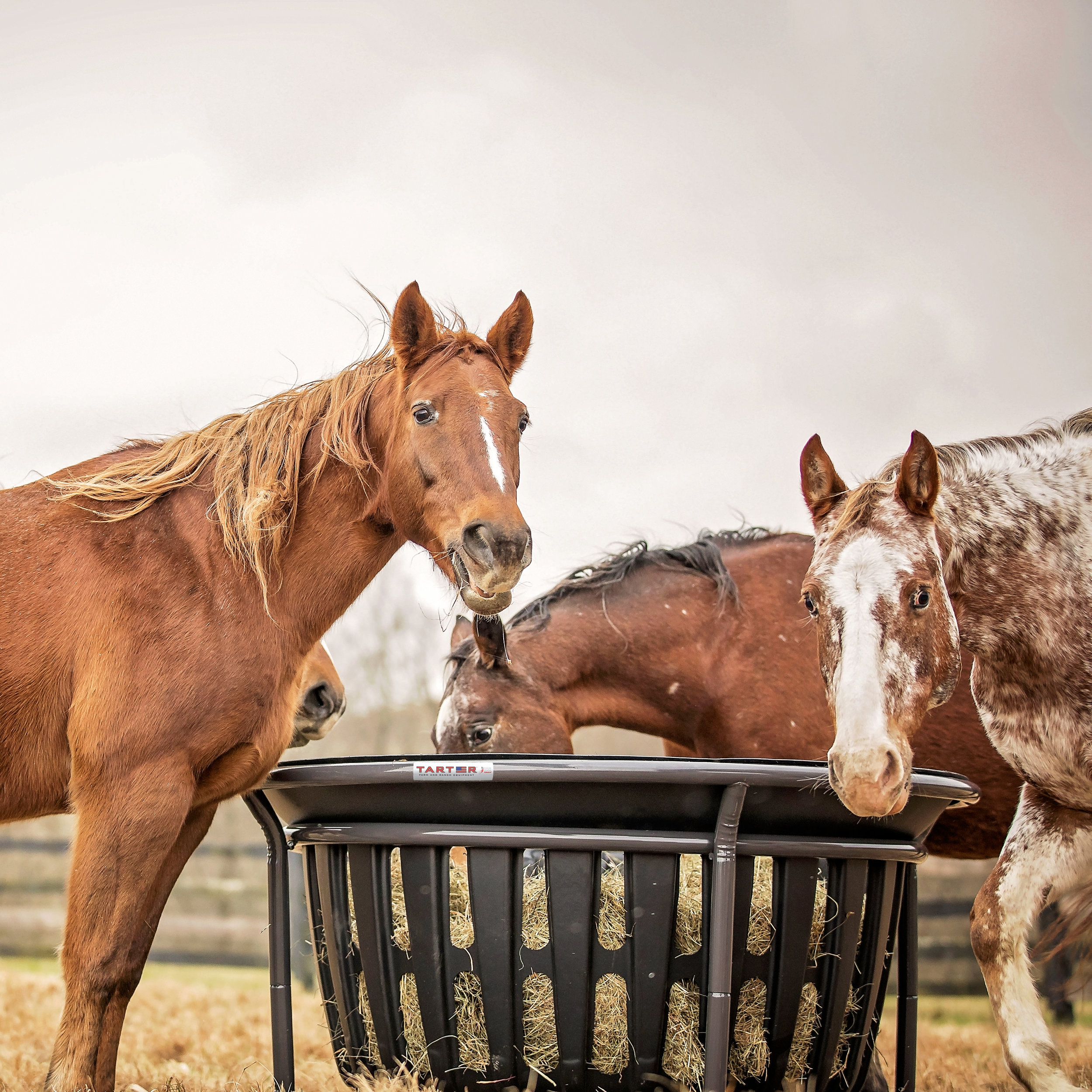 Equine Feeders -