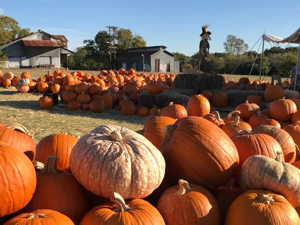 PumpkinPatch-Pumpkins.jpg