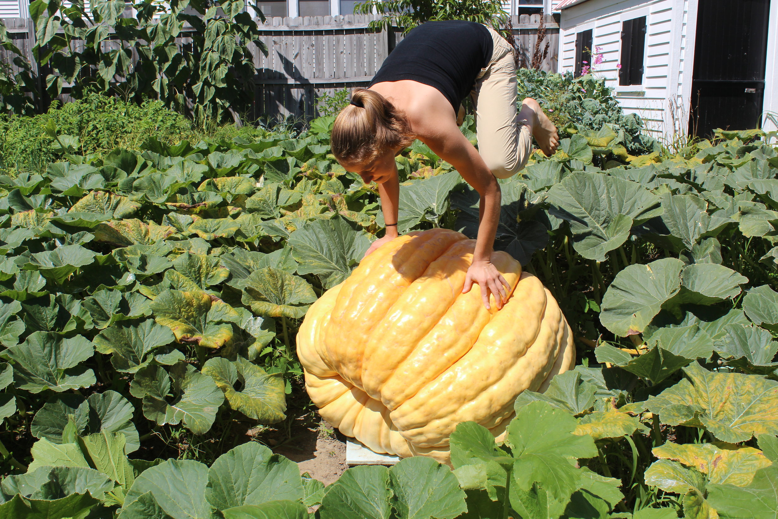 Crow pose on a giant pumpkin! Who doesn't love yoga in the garden!?