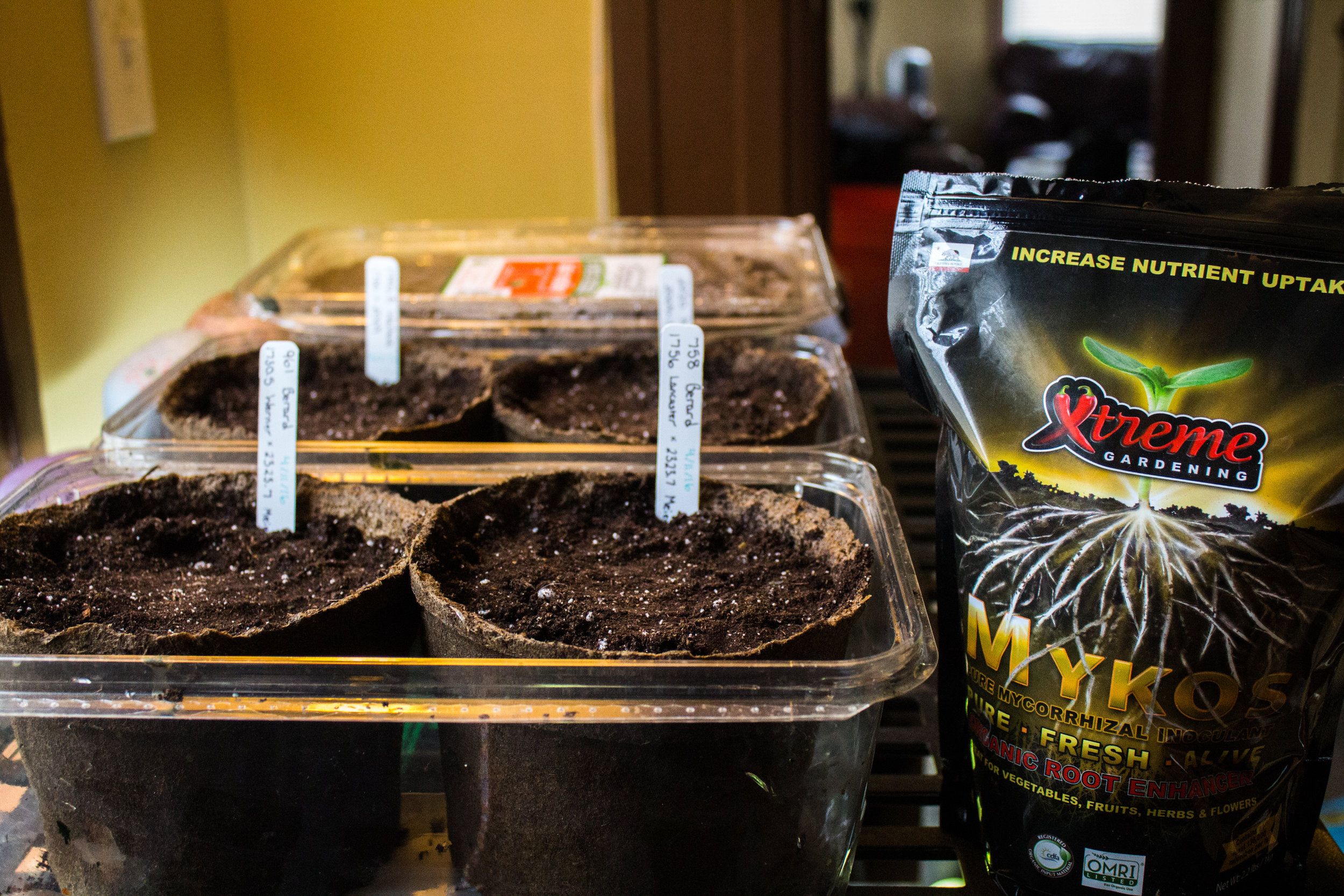 Starting the seeds on 4/11/16