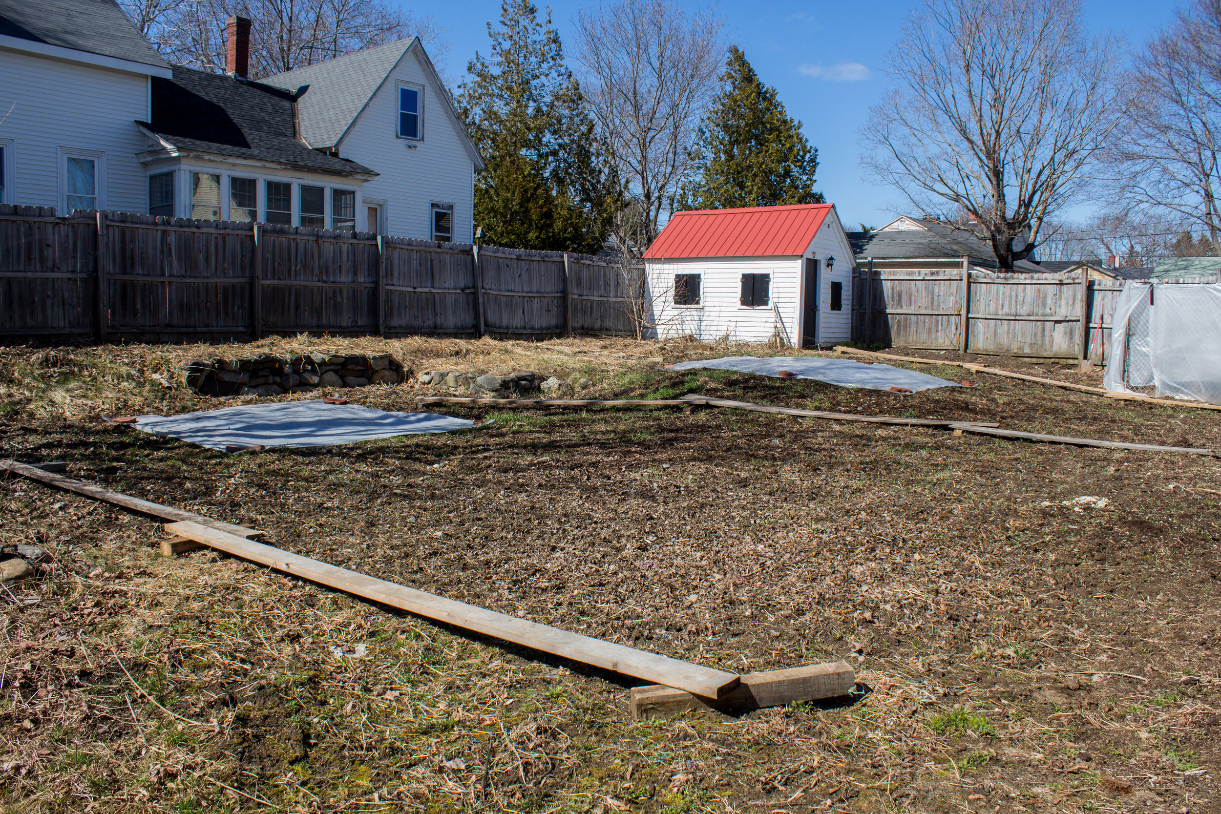 This is my pumpkin patch at home. I just spread sulfur on it to lower the pH (per my soil test's recommendations). I also have clear plastic placed down to warm up the soil, and compaction boards to prevent me from compacting the soil when I walk through my patch. The winter rye didn't grow as much as I hoped, so next year I will plant more and plant it earlier in the fall.