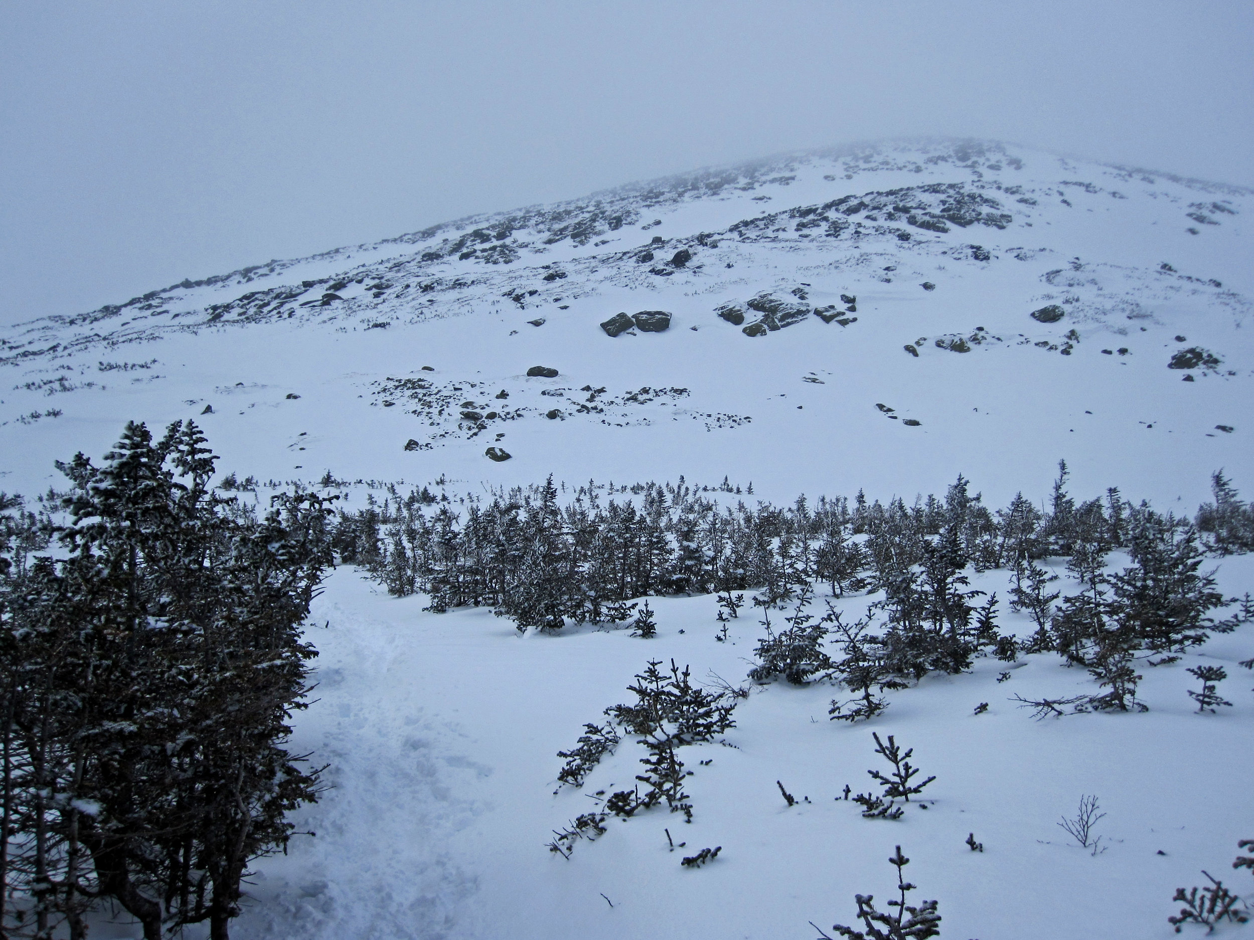 Getting closer to the summit. These are the last of the trees before getting to the tundra.