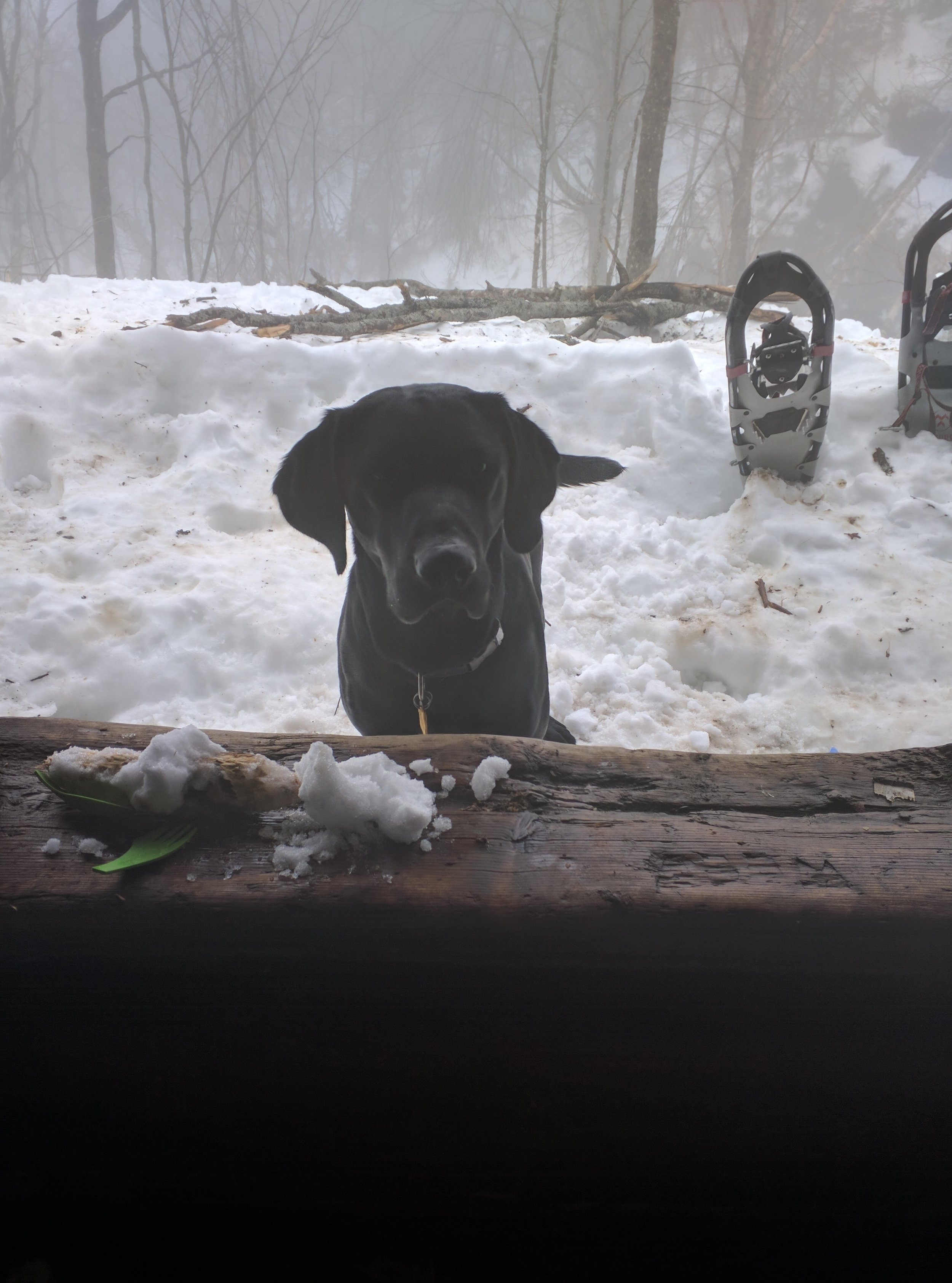 Our dog Lincoln camping with us in the lean-to.