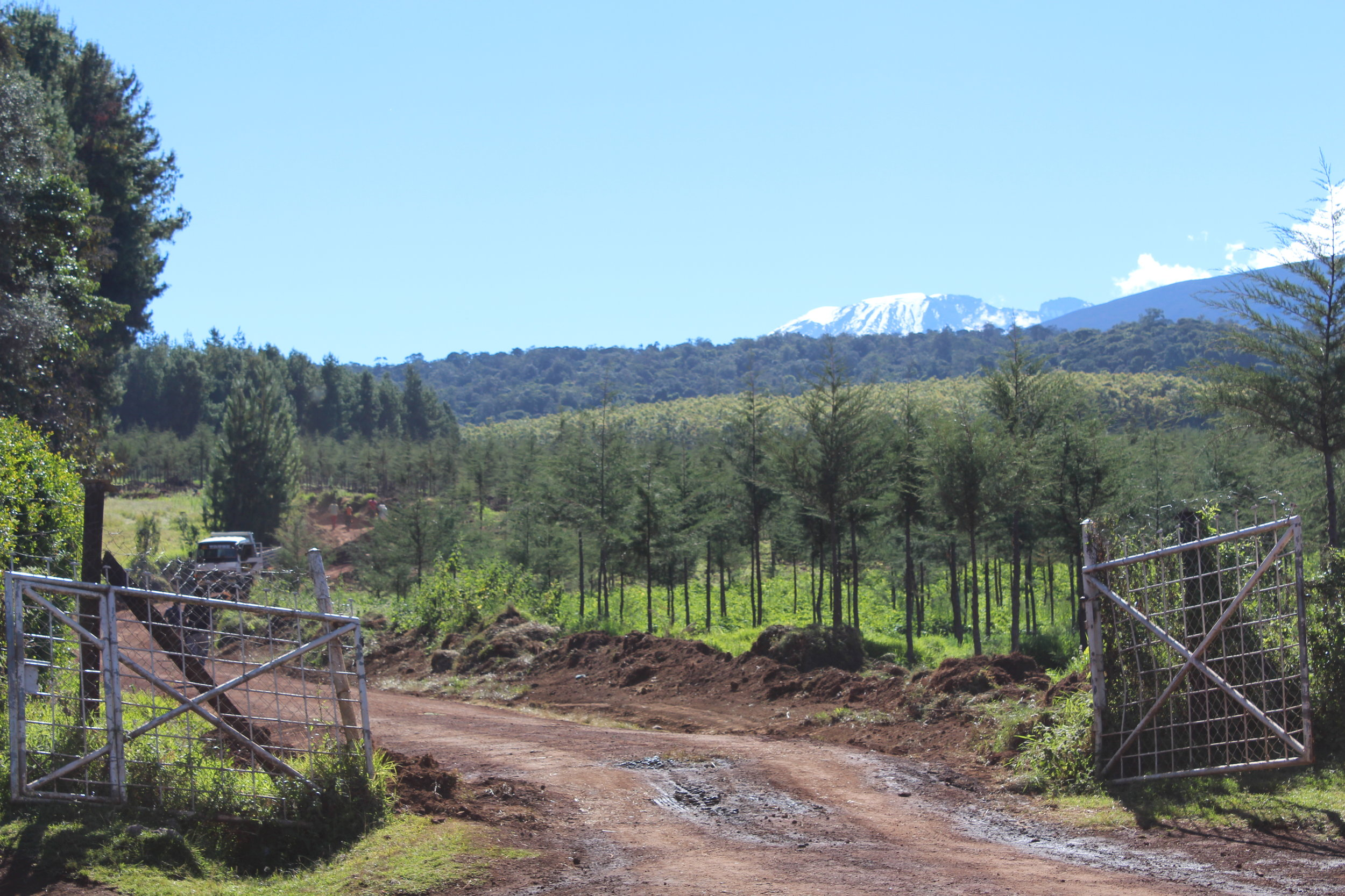 View of Kilimanjaro's summit from the Londorossi Gate.