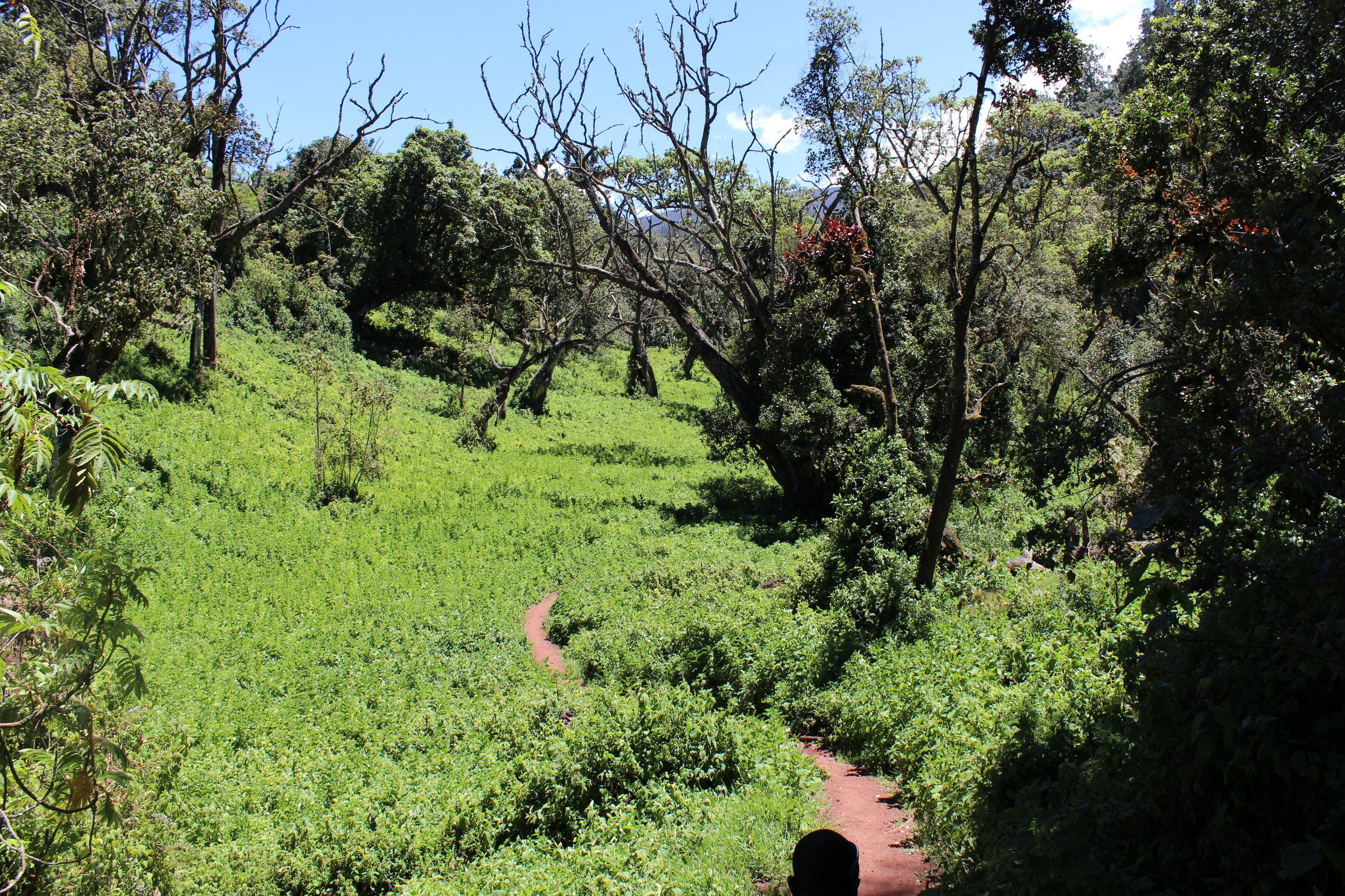 Lemosho Route Day 1.