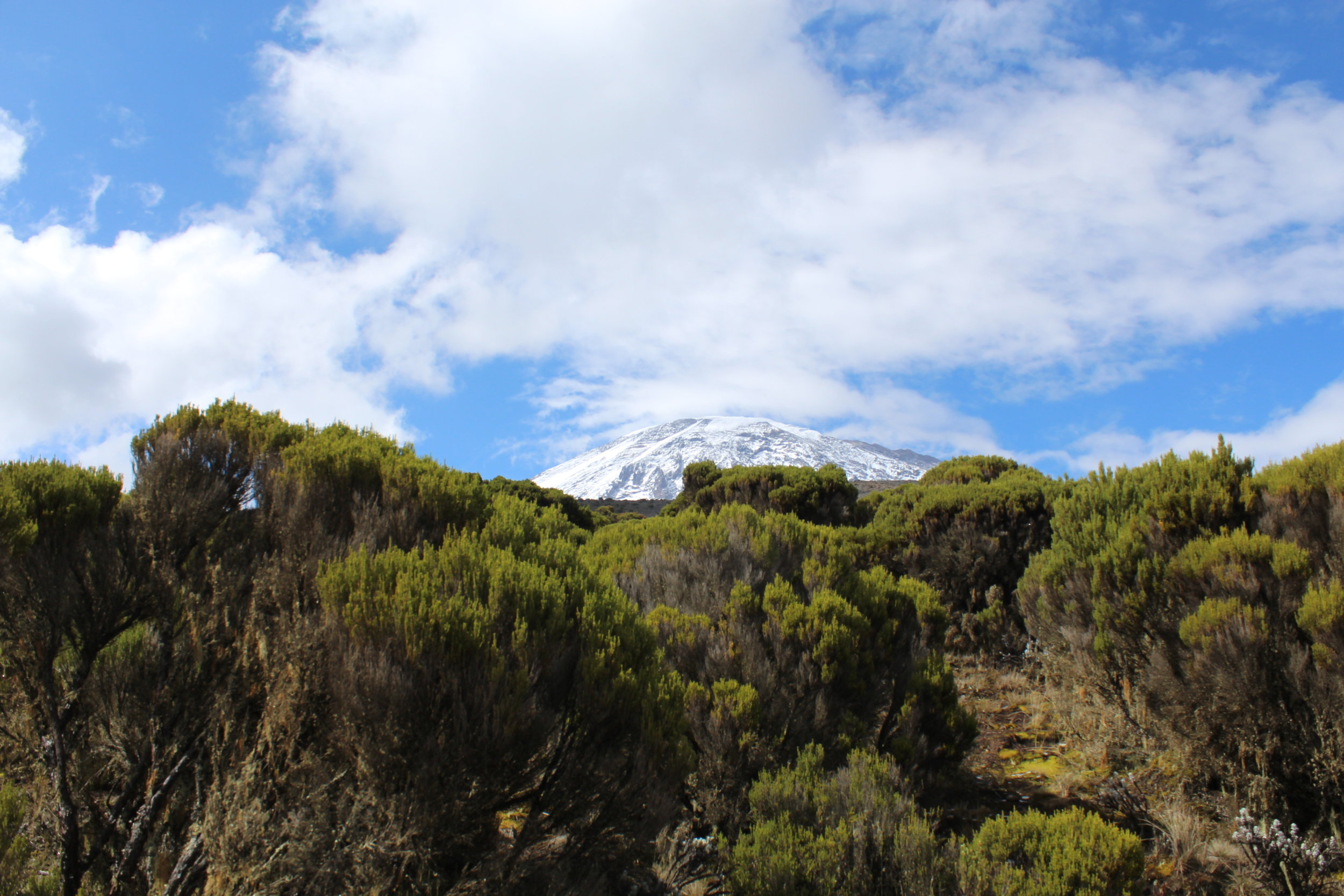 View of Kilimanjaro from Millenium Camp