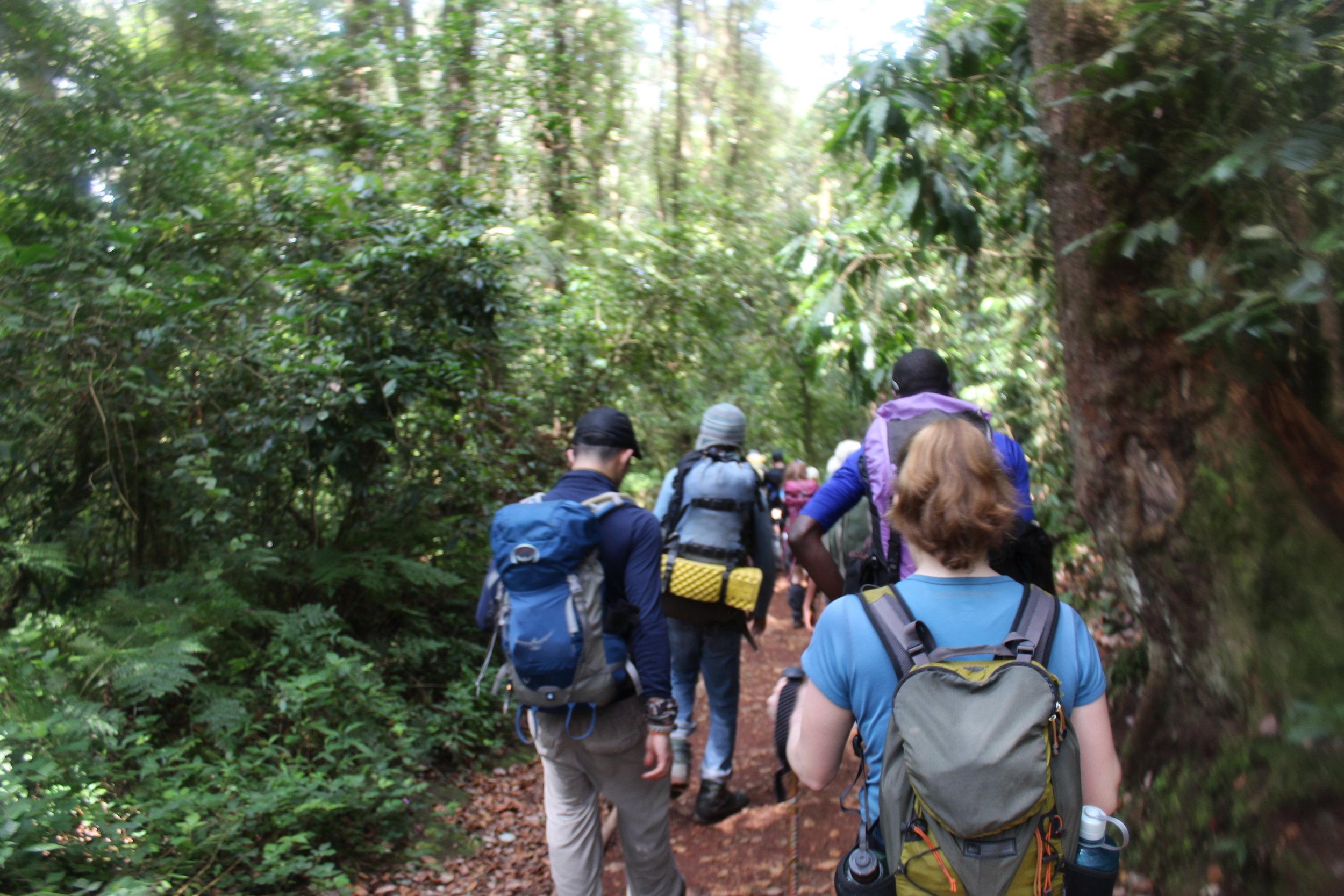 Hiking in the jungle down to the Mweka Gate